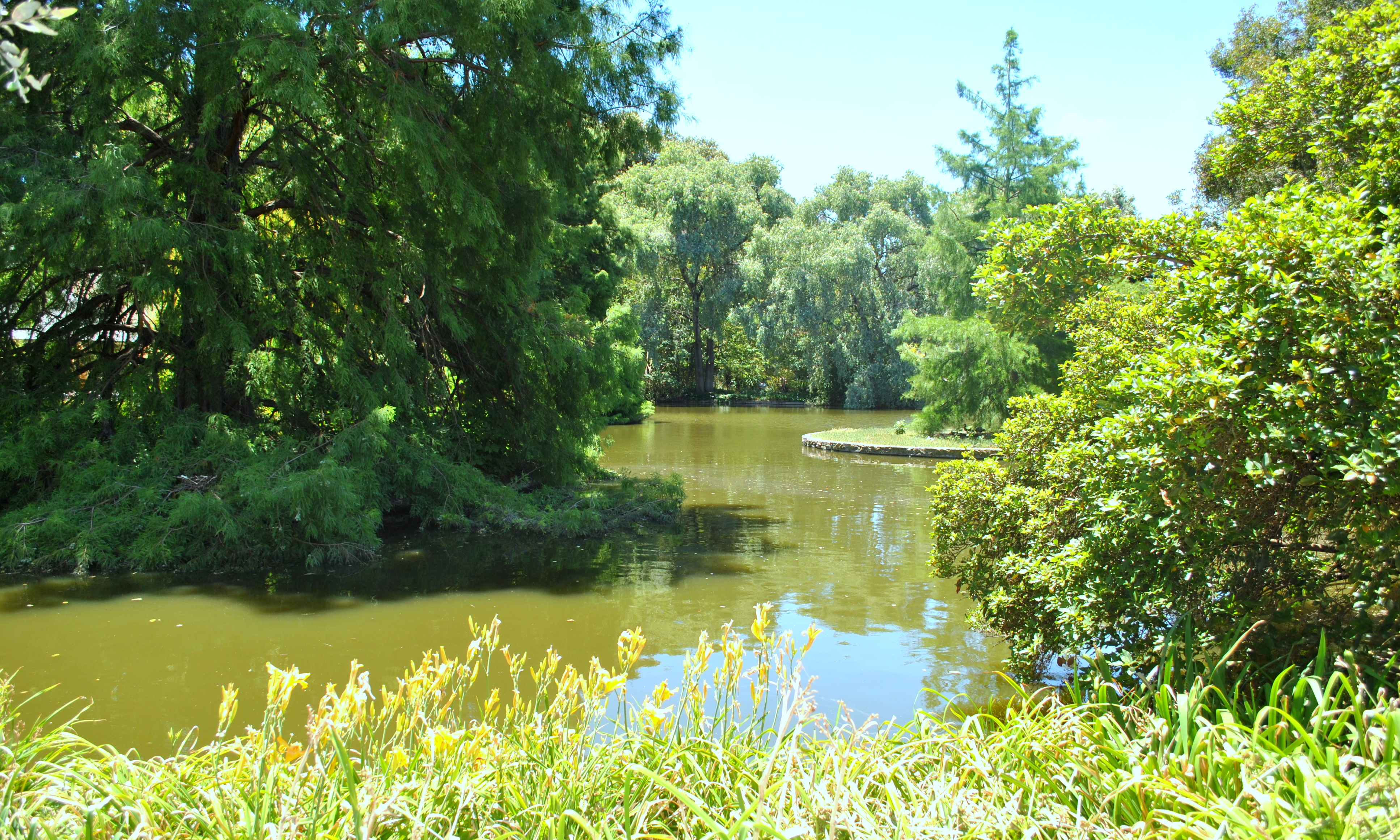 Trees and the Lake, Bunch, Channel, Flow, Lake, HQ Photo