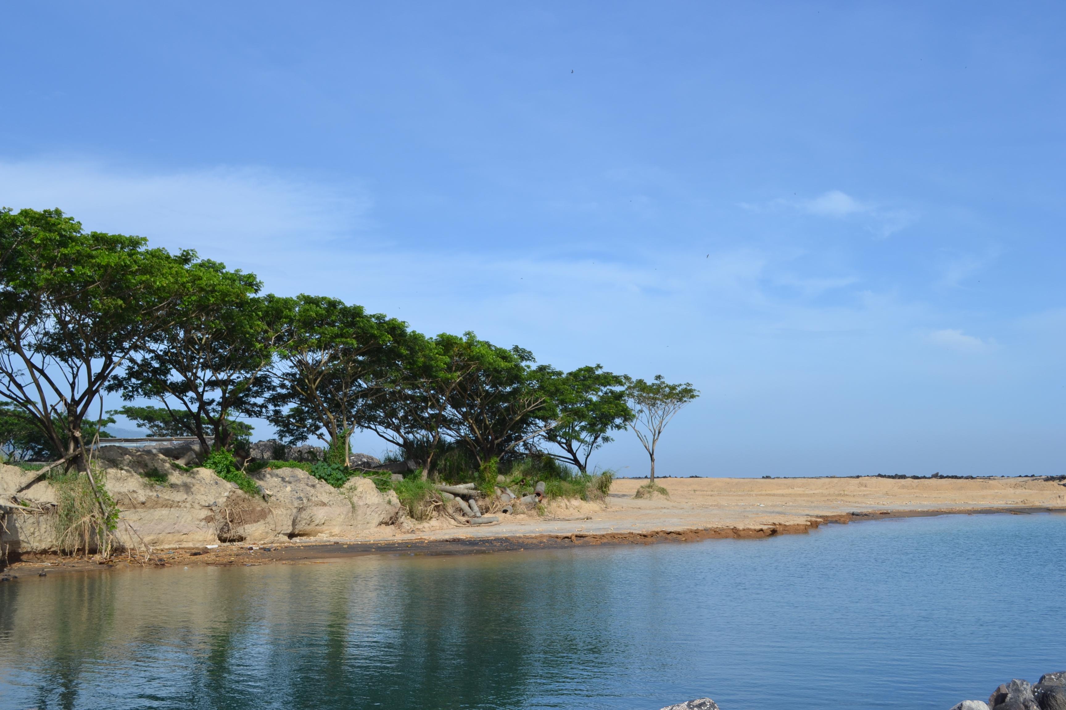 Trees at the beach photo