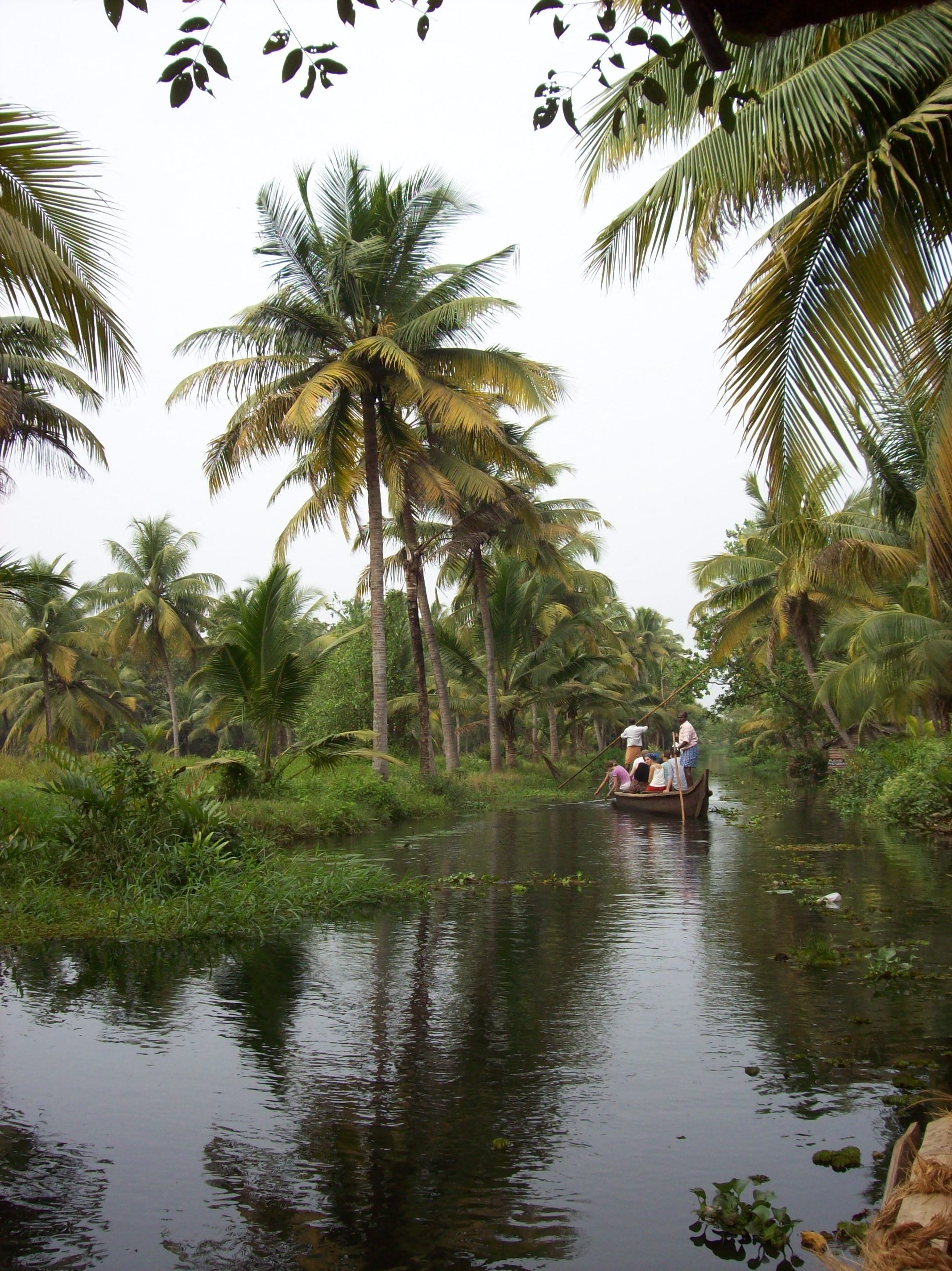 Trees by the river, Boat, India, Palm, River, HQ Photo