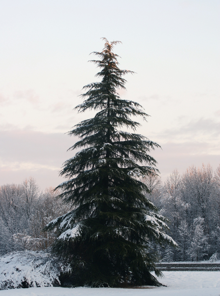 Trees covered in snow, Alp, Summit, Park, Rime, HQ Photo