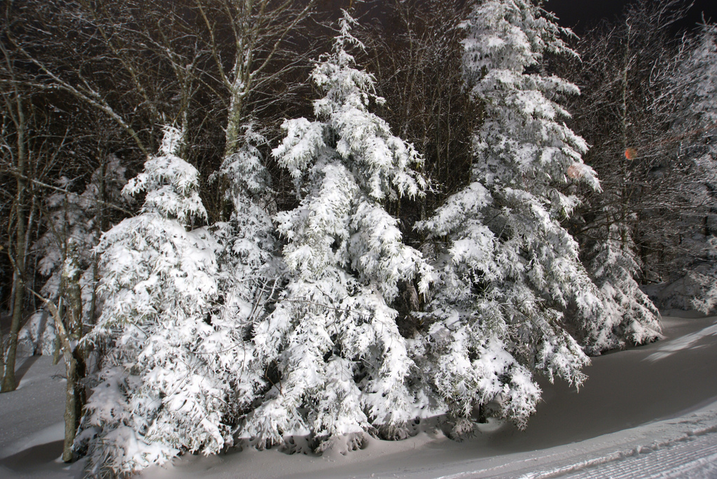 Trees covered in snow photo