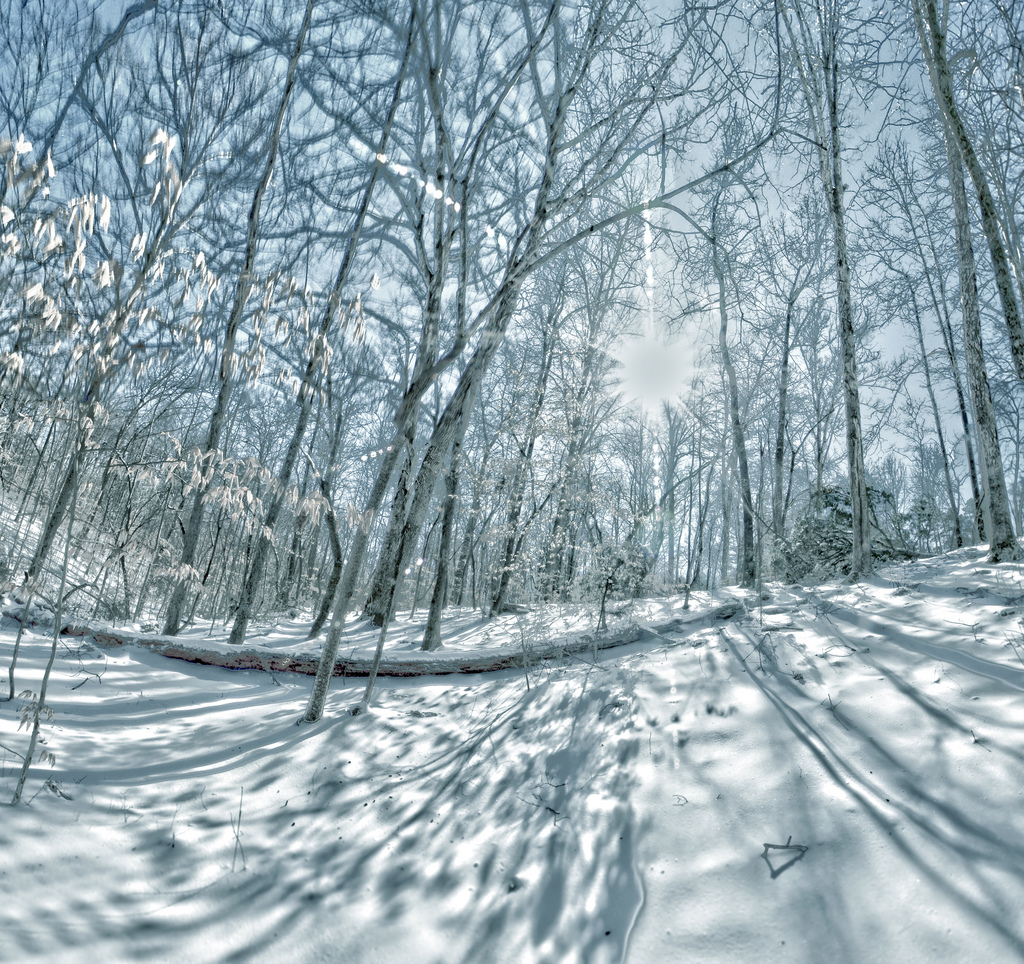 Trees covered in snow, Alp, Summit, Panorama, Park, HQ Photo
