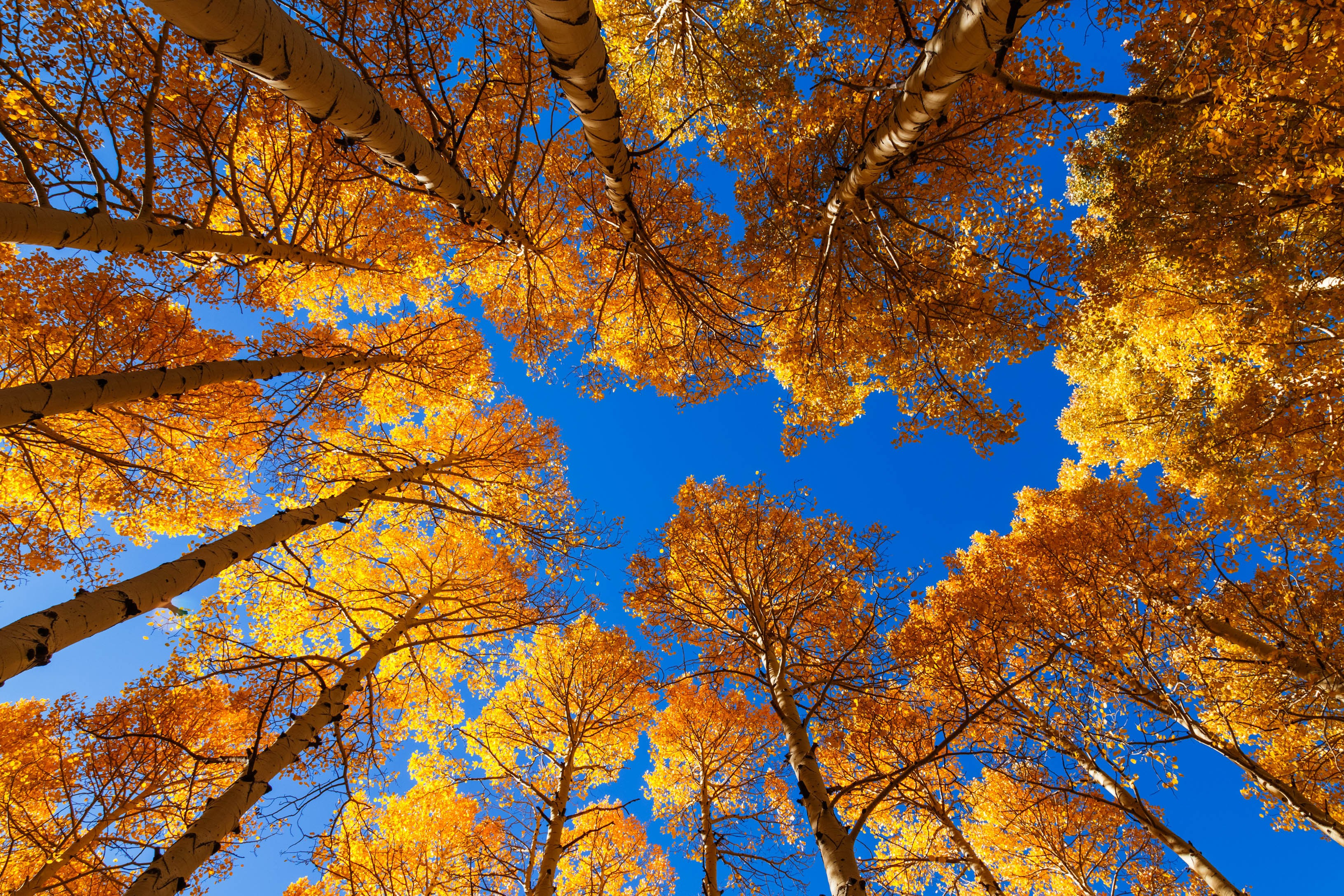 Where to See Fall Leaves Change Color in Arizona | Phoenix New Times