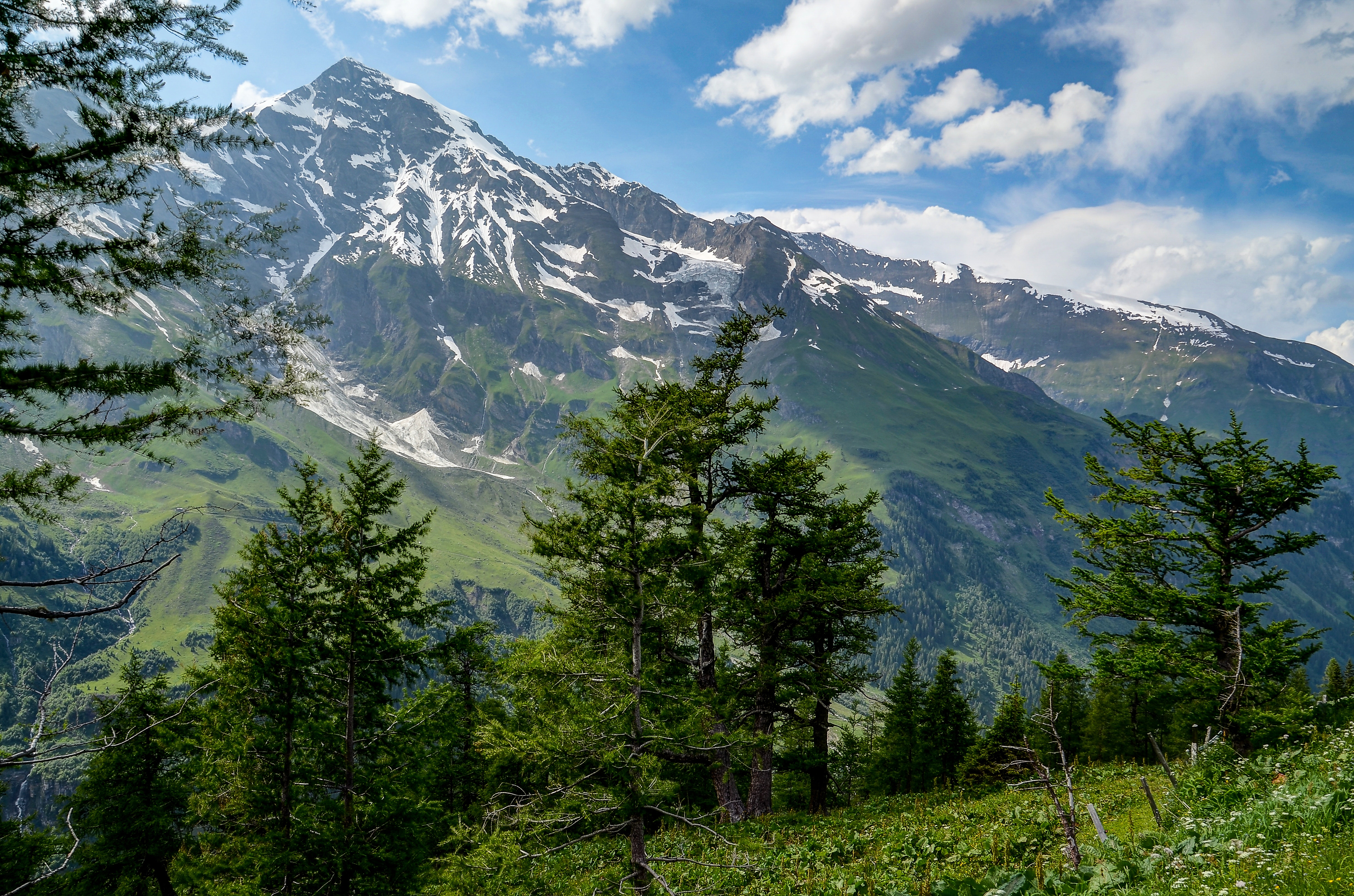 Trees in Front of Mountain, Alps, Mountain, Valley, Trees, HQ Photo