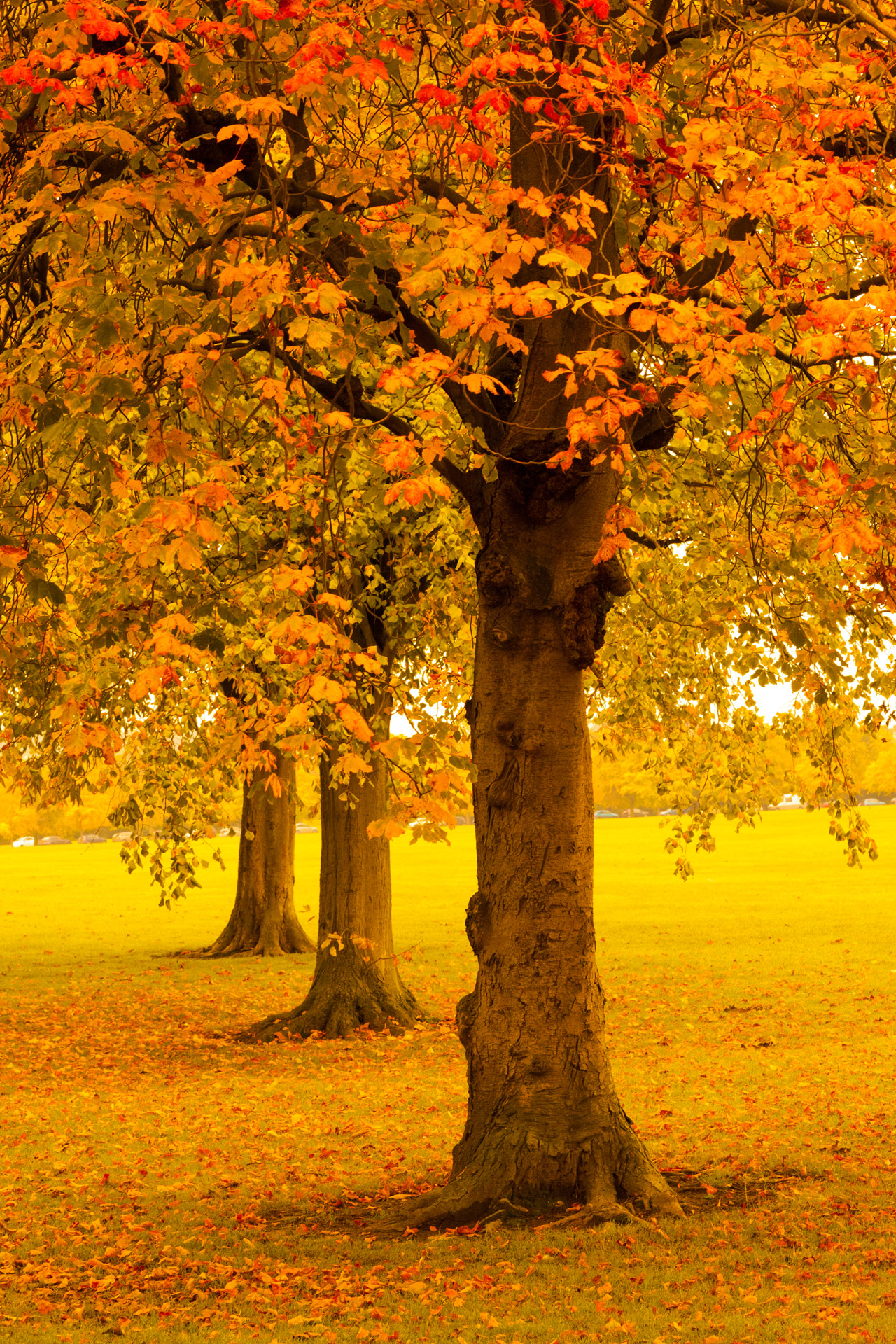 Autumn Trees In Park Free Stock Photo - Public Domain Pictures