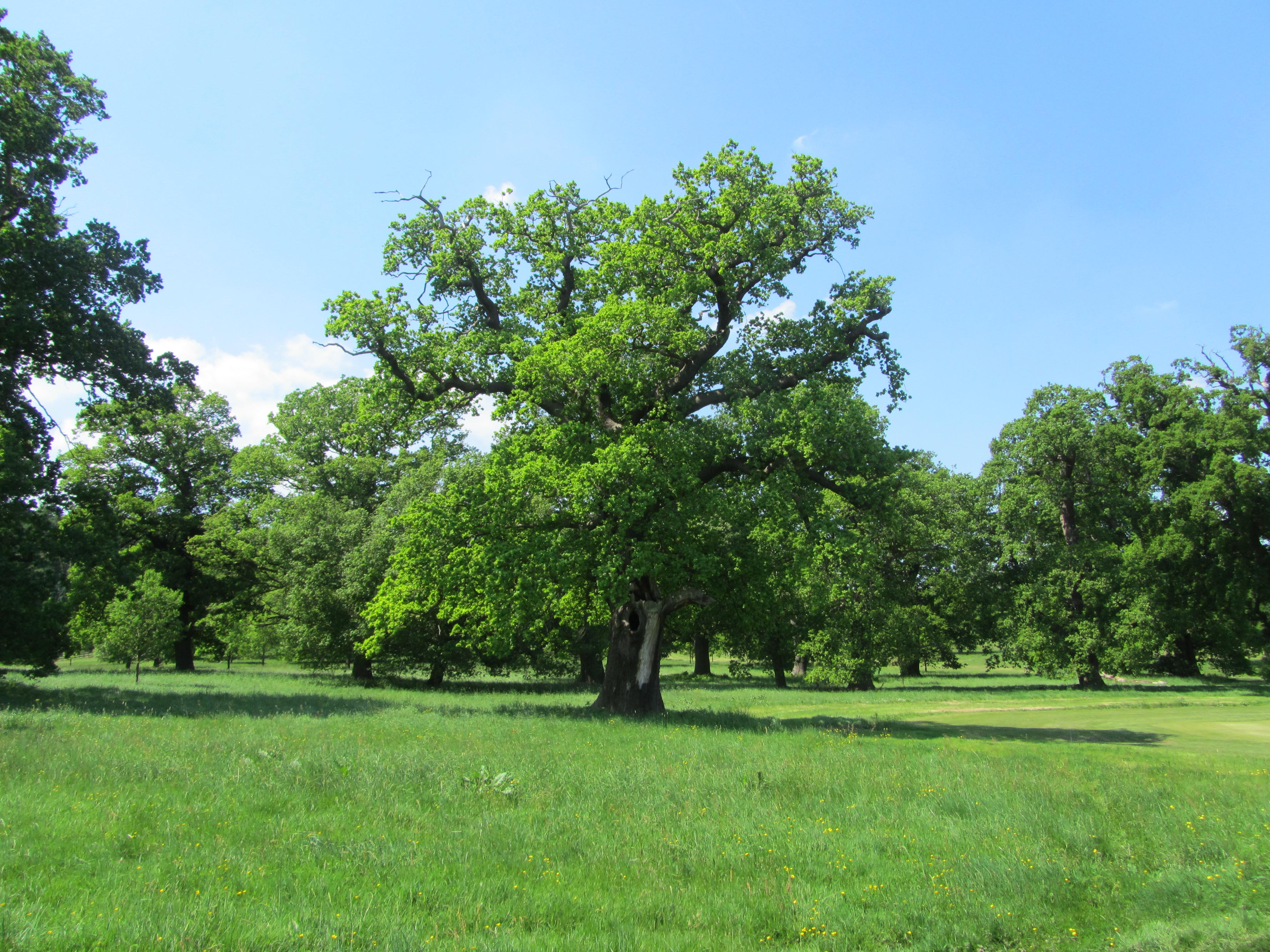 Windsor's Great Park | Frames of Reference