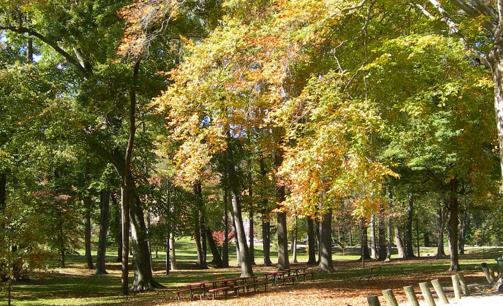 File:Central Park trees Ashland KY Oct 2006.JPG - Wikipedia