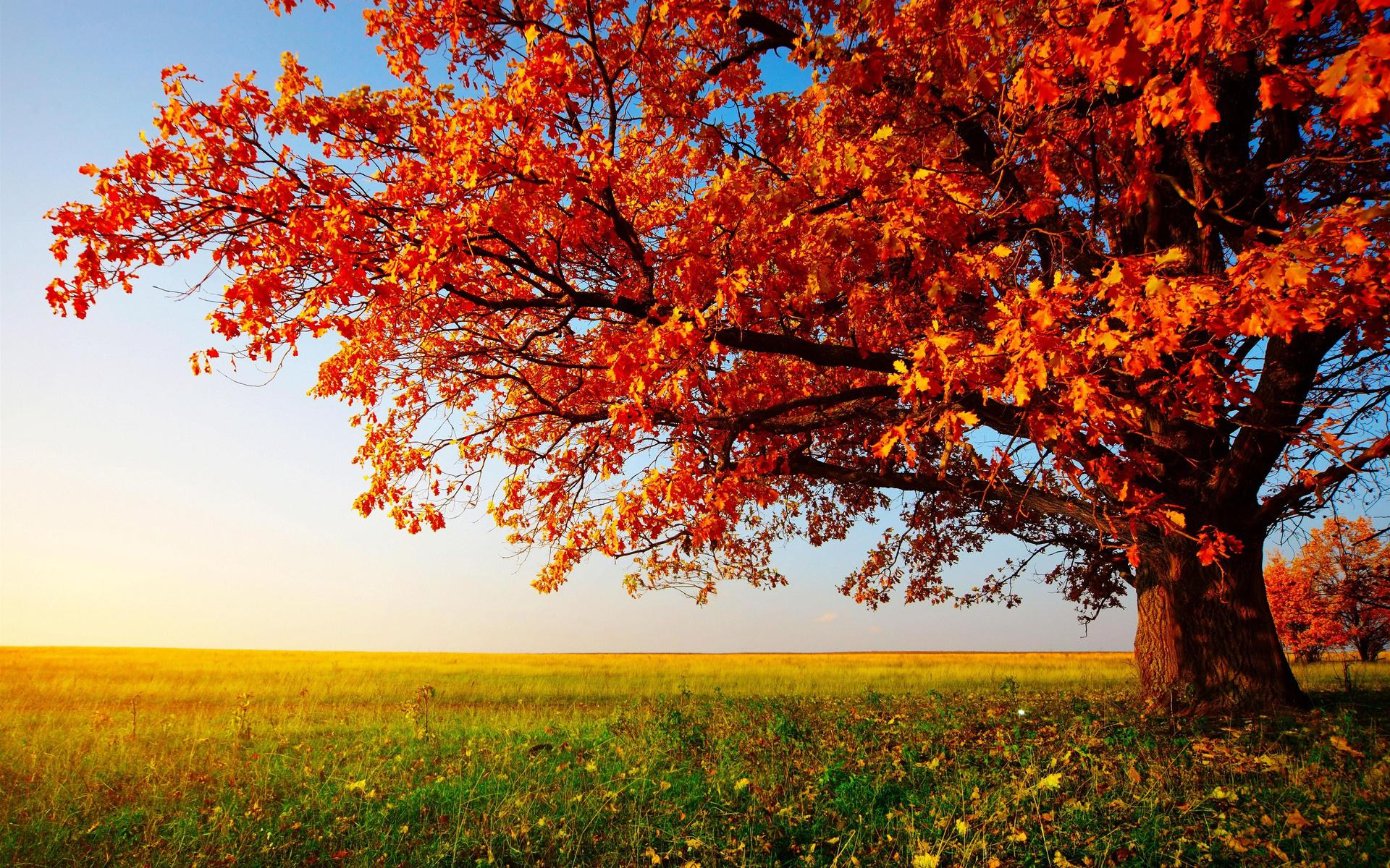 HD Autumn Tree Landscape Images Wallpaper | Download Free - 144244