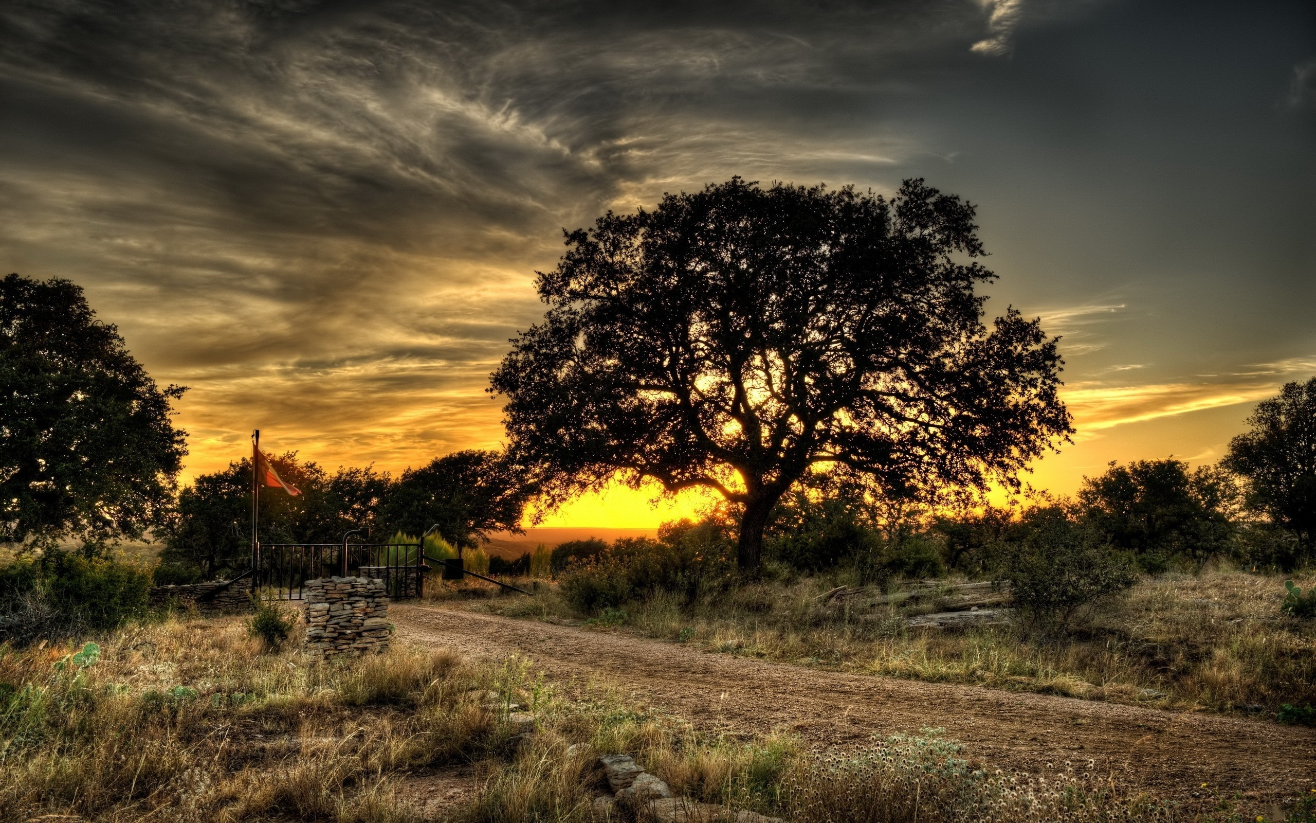 Trees: Landscapes Trees Nature Photography Beautiful Wallpaper ...