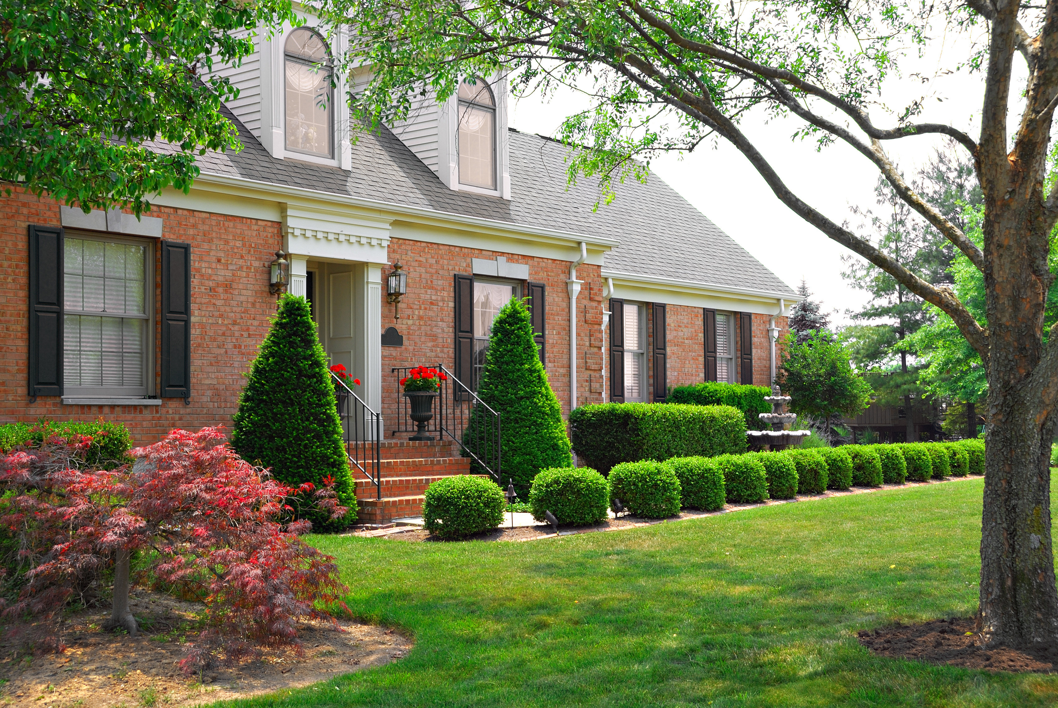 Do Trees Affect Your Home's Foundation? – Thomas Engineering Consultants