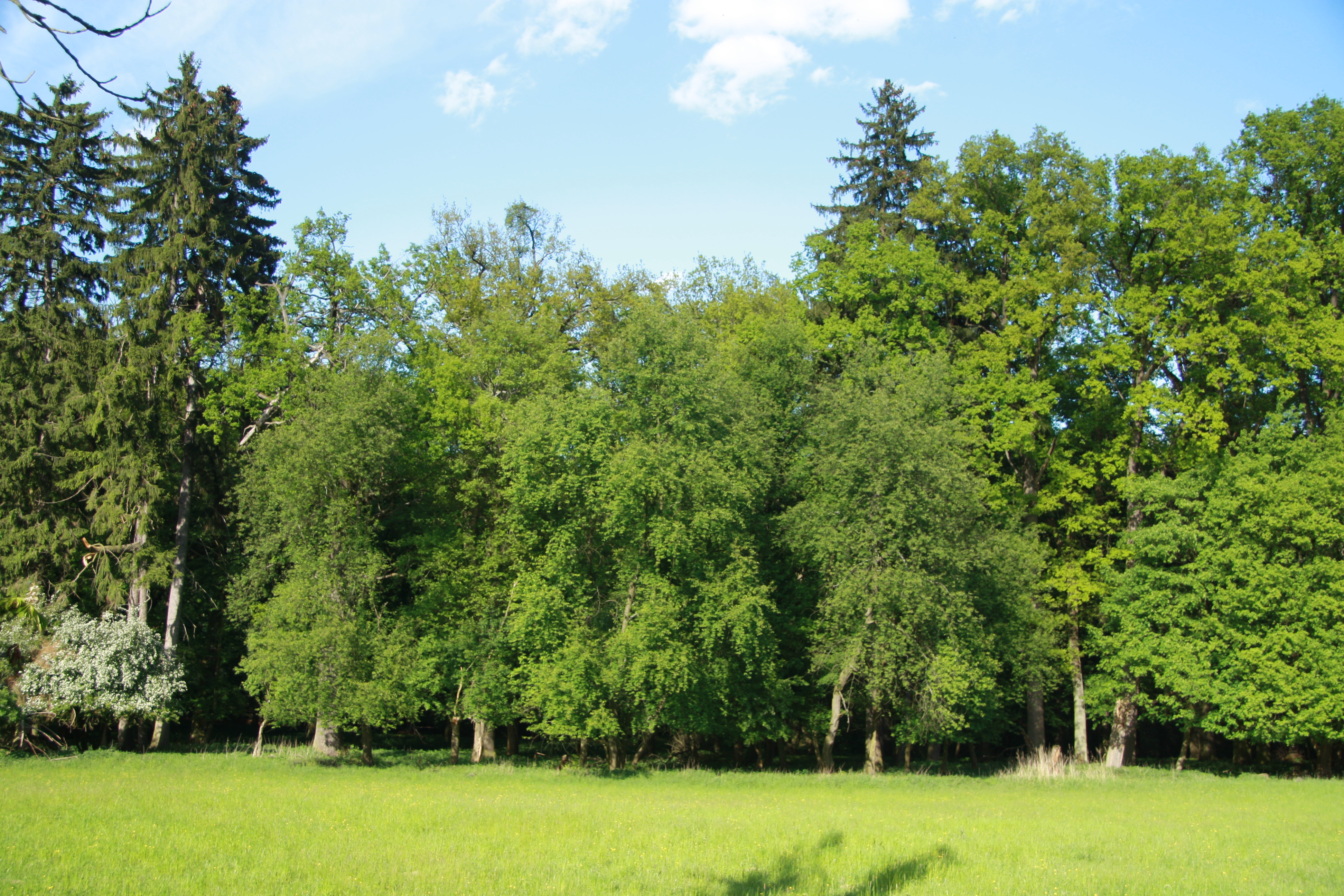 File:Trees near house in Náměšťská obora in Kralice nad Oslavou ...