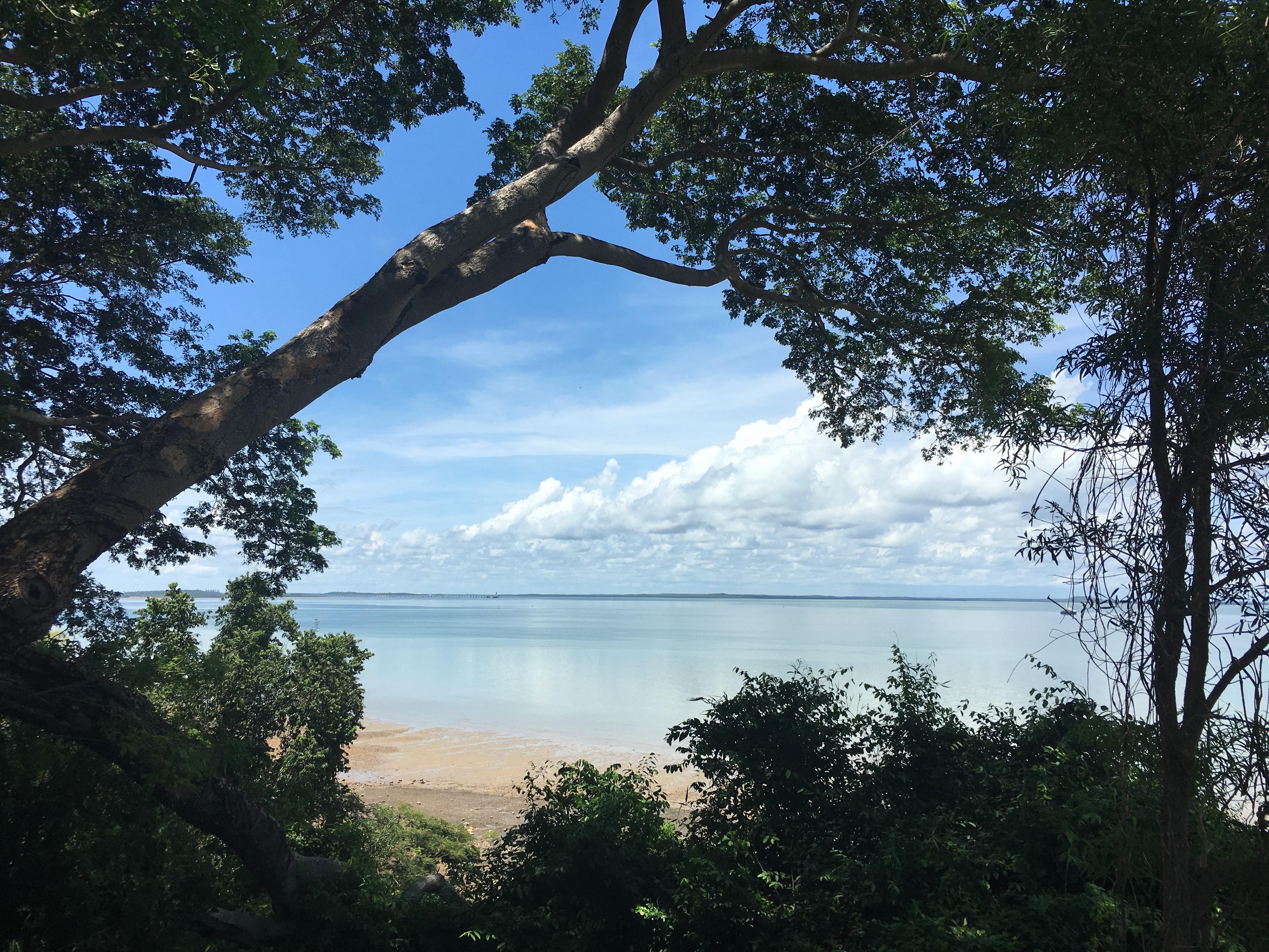 Trees on beach against sky photo