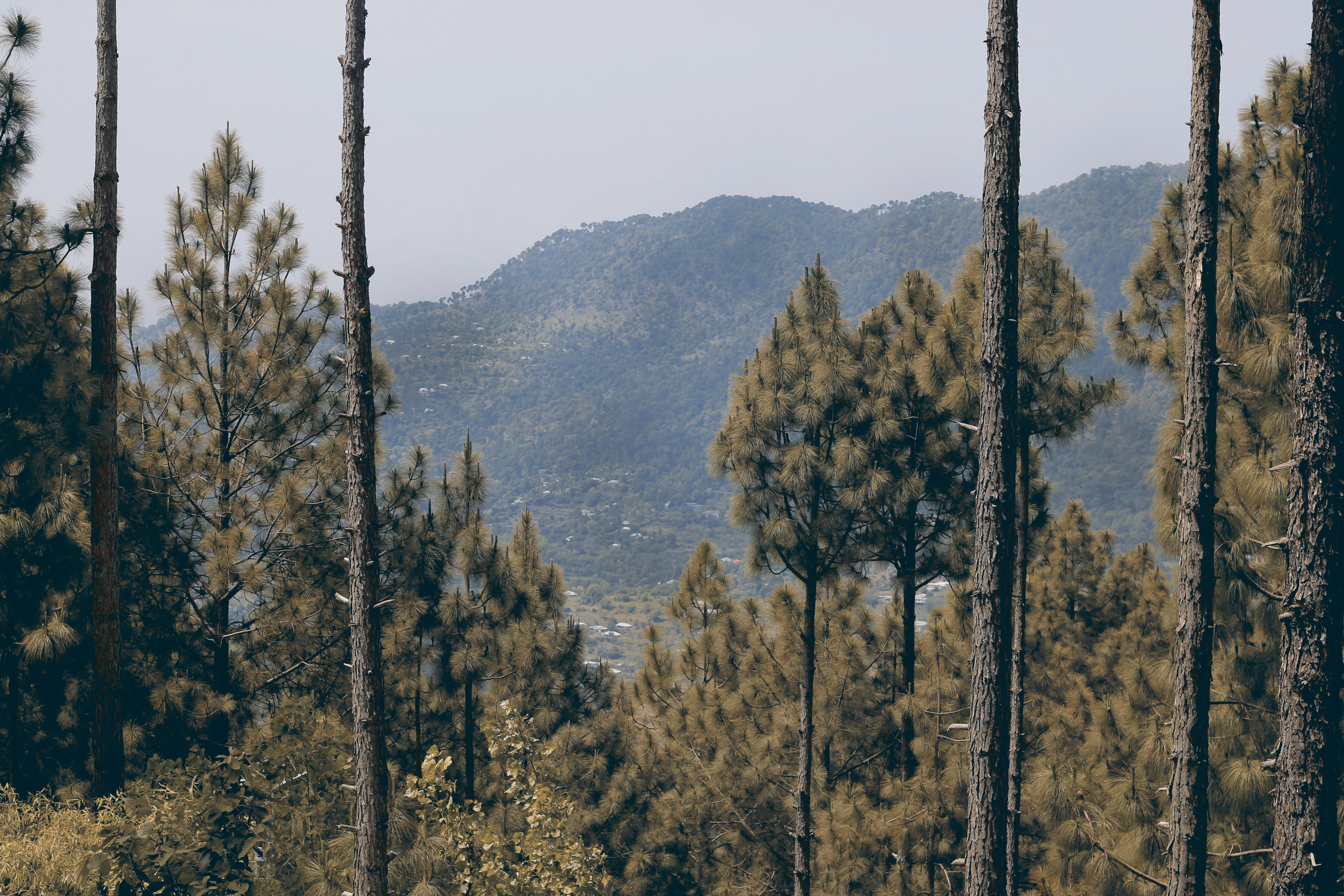 Trees on mountain photo
