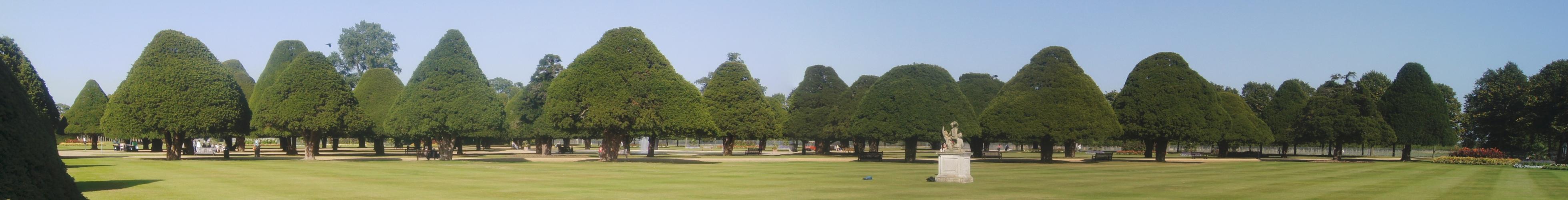 Panorama Photo Trees