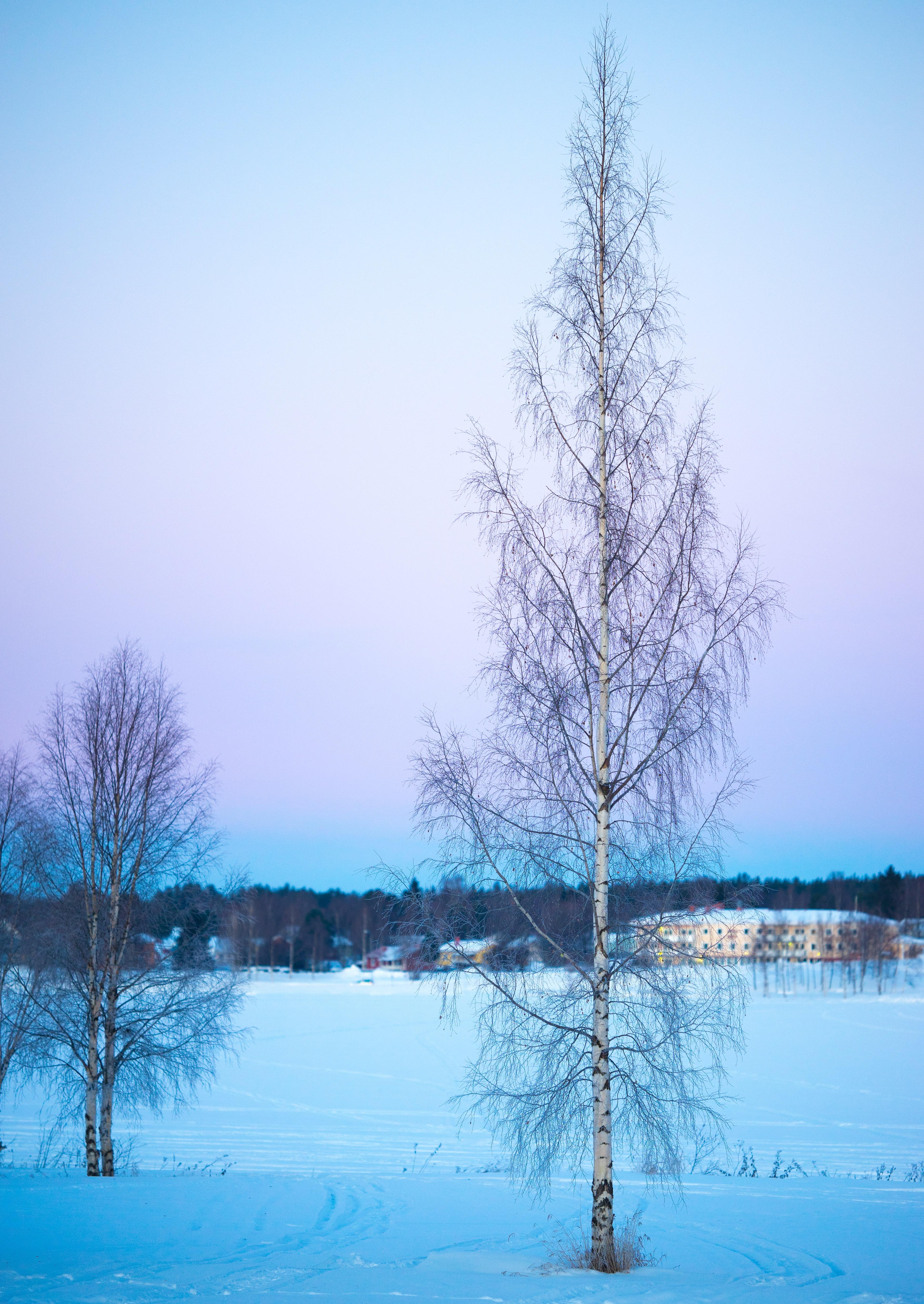 Trees under blue sky photo