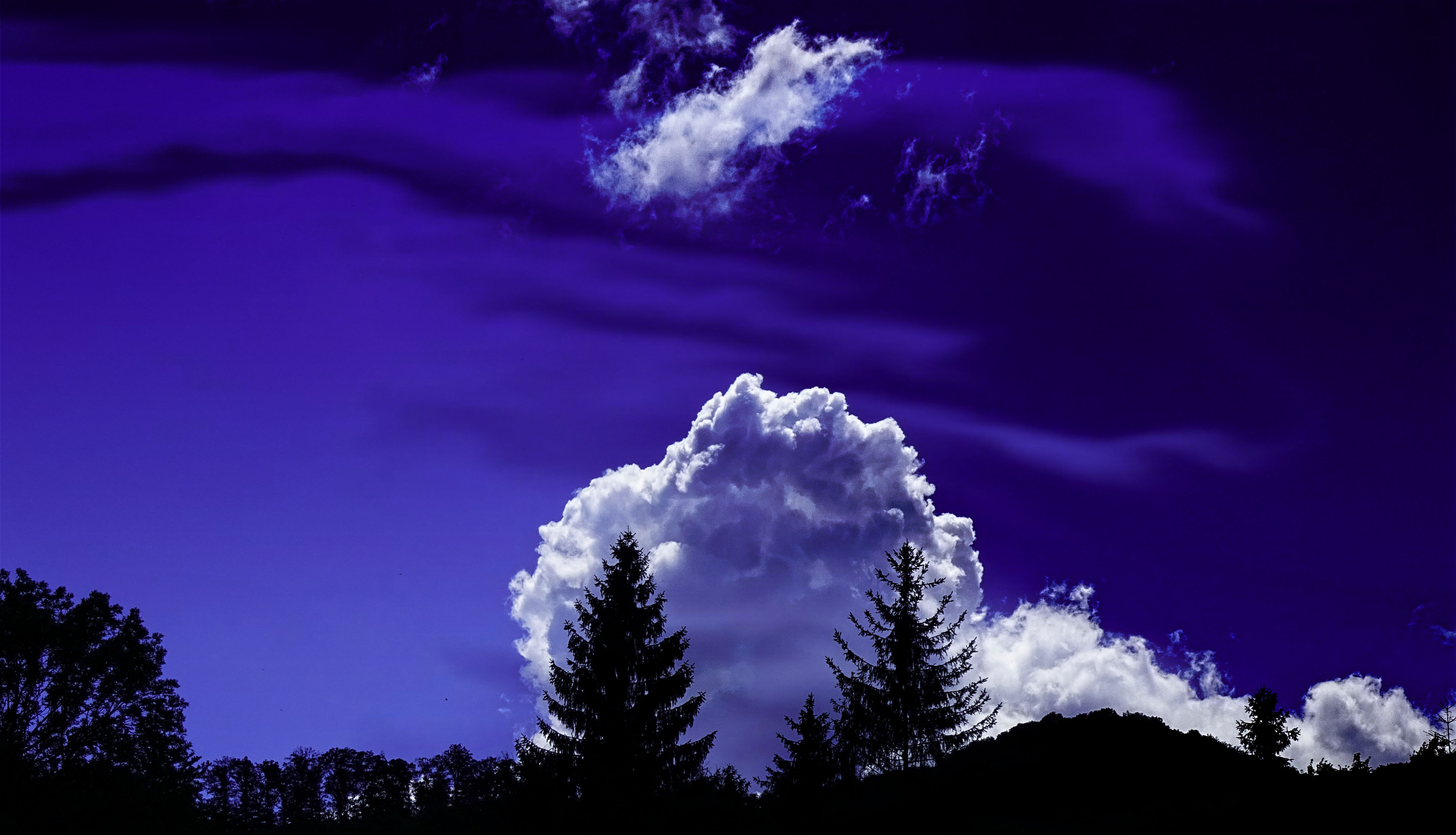 Trees Under White Clouds and Blue Sky, Outdoors, Trees, Sky, Silhouettes, HQ Photo