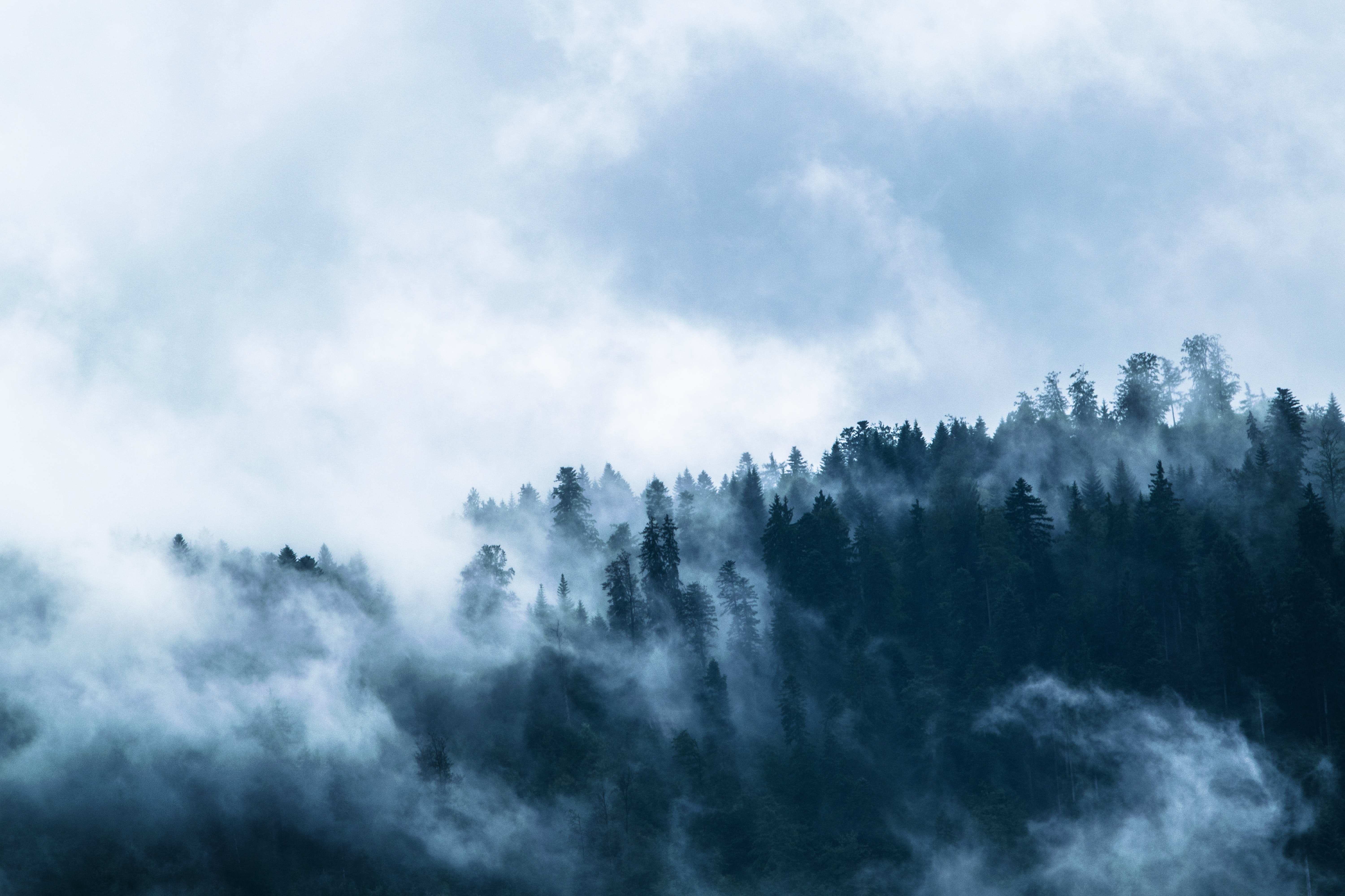 Trees With Fog, Clouds, Misty, Wilderness, Trees, HQ Photo