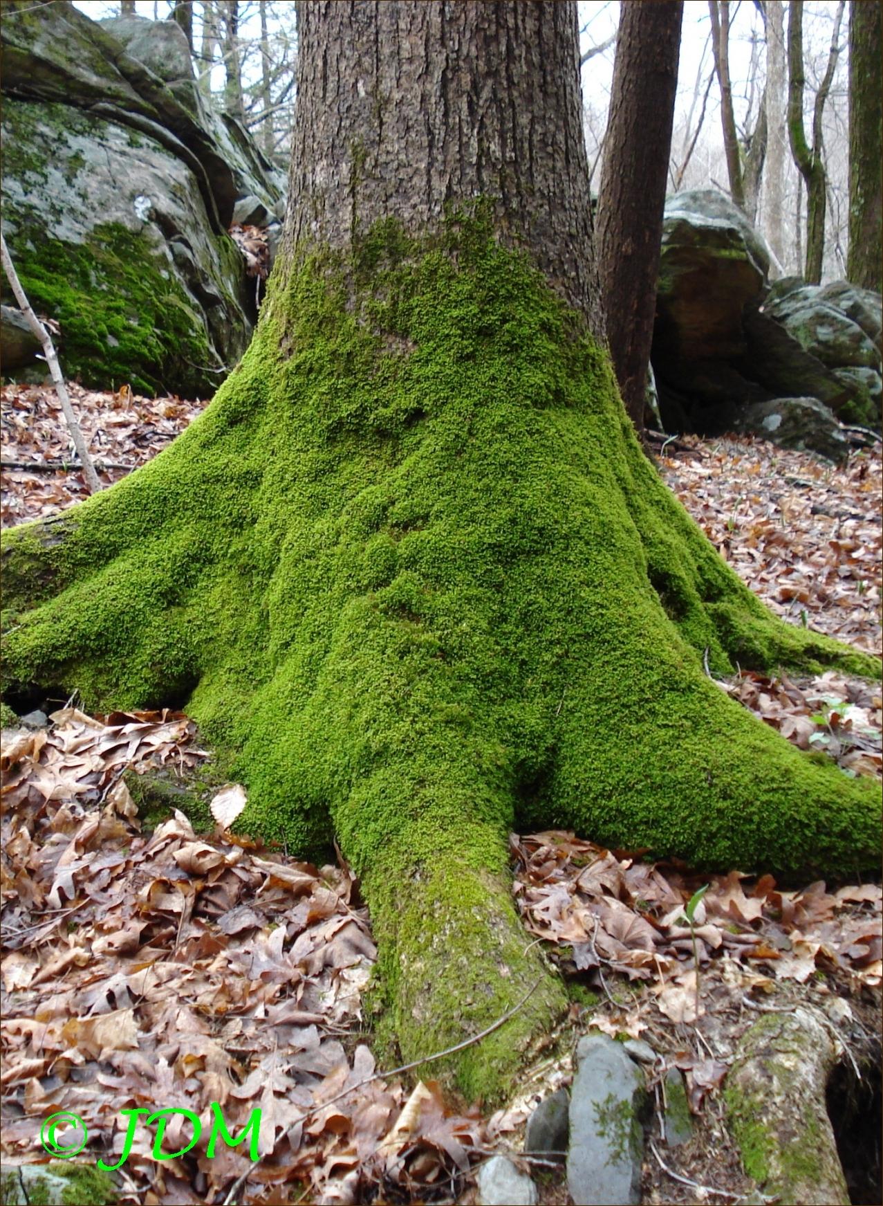 Free photo: Moss on tree - Dead, Green, Moss - Free Download - Jooinn