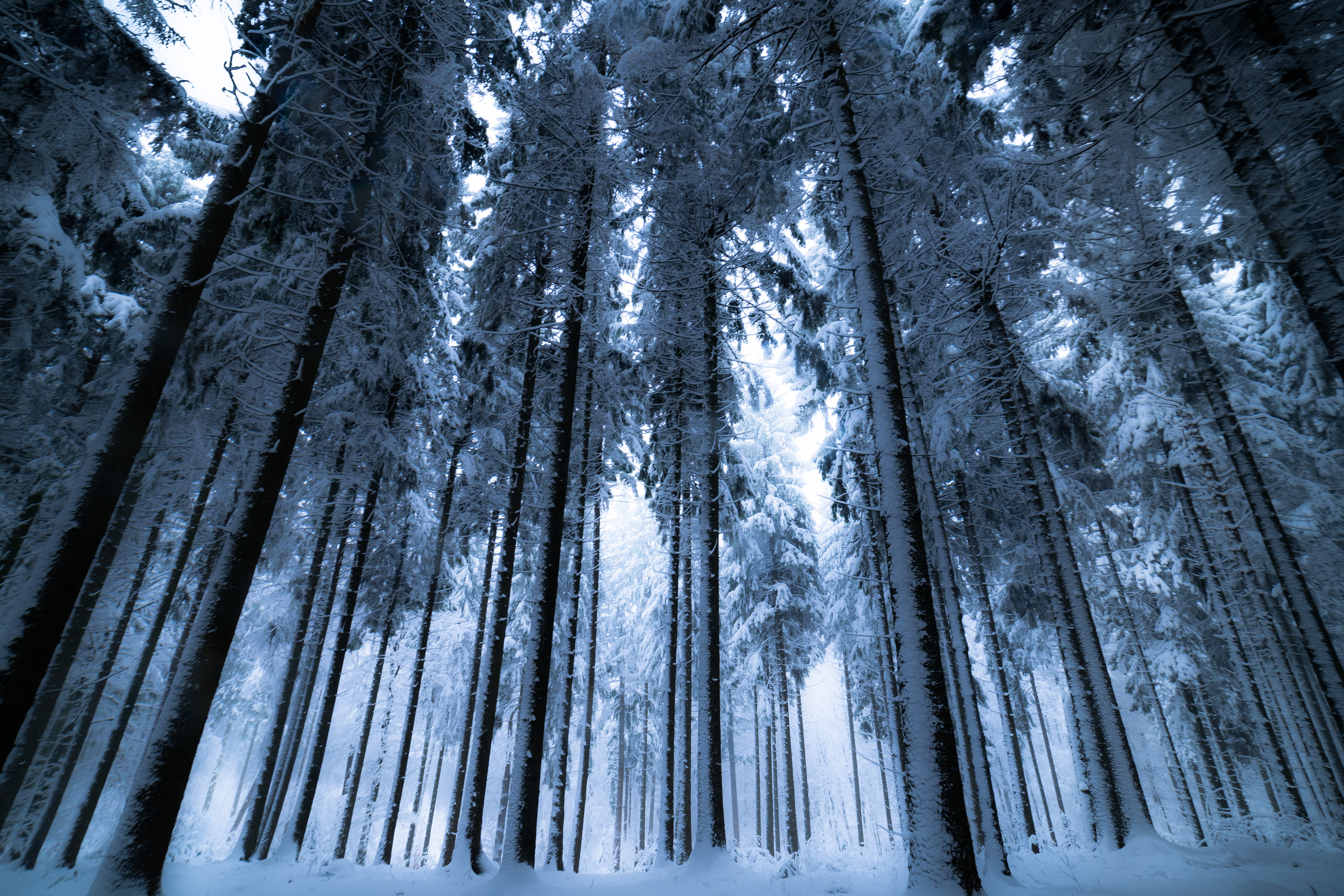 Trees with snows photo