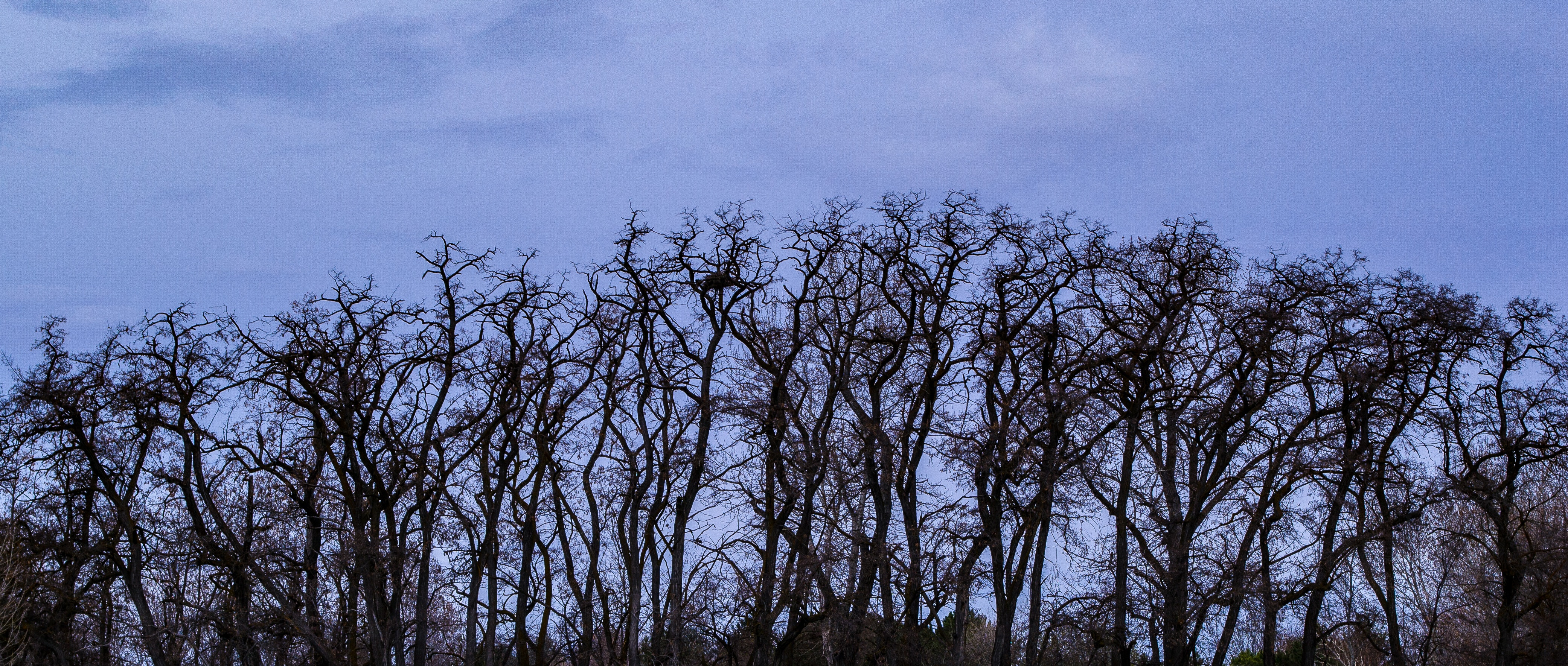 Trees without foliage during the cold season photo