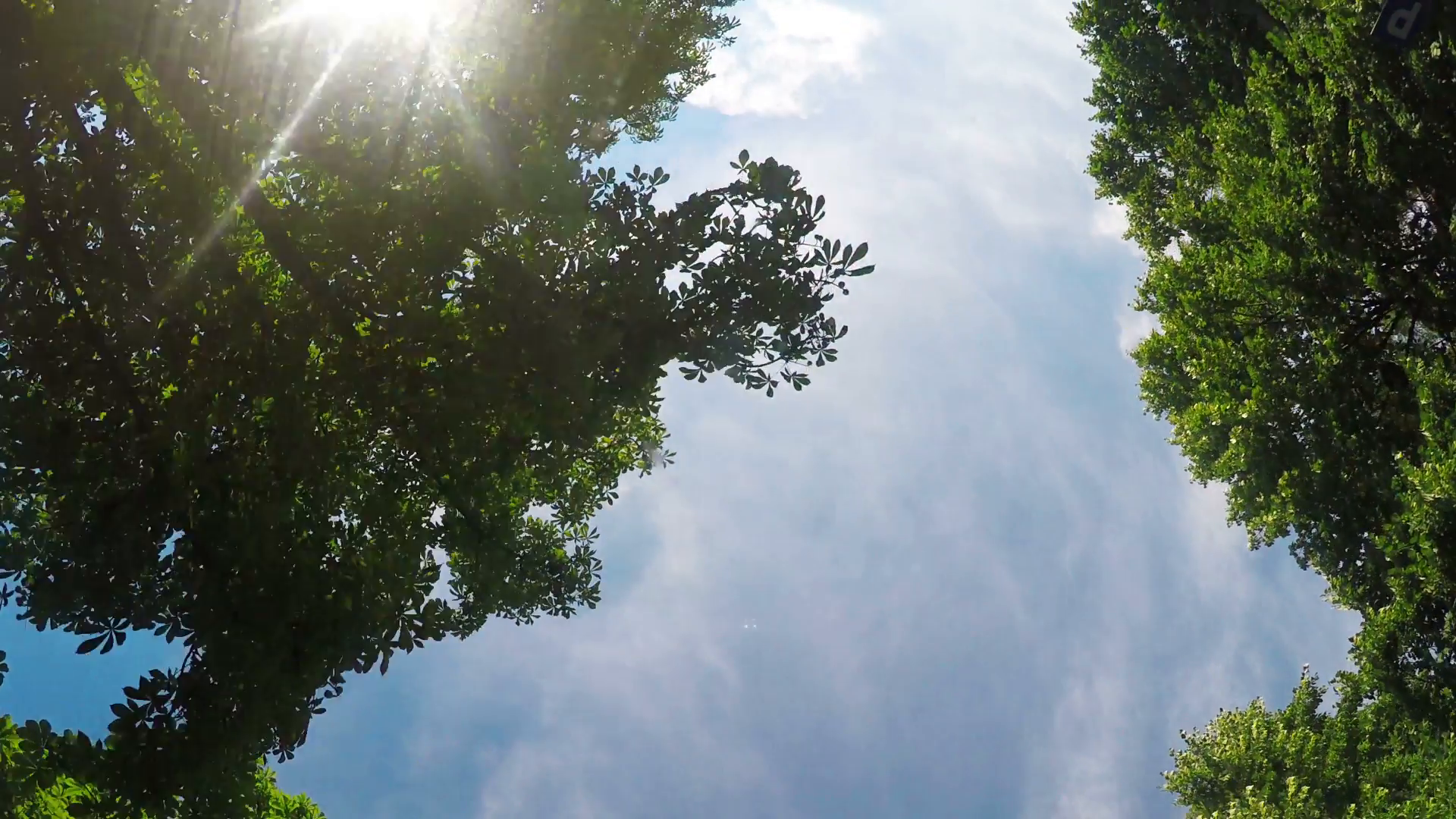 Driving car in tree alley, low angle view at treetops and blue sky ...
