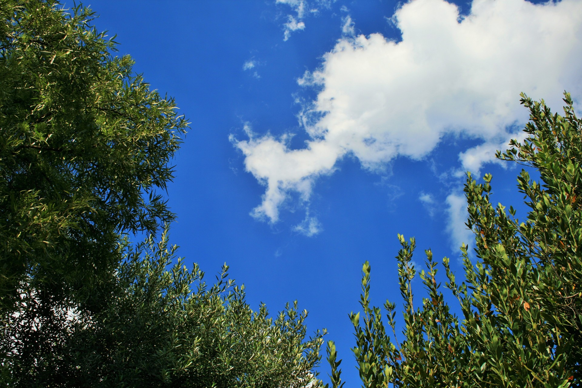Tree Tops With Sky And Clouds Free Stock Photo - Public Domain Pictures