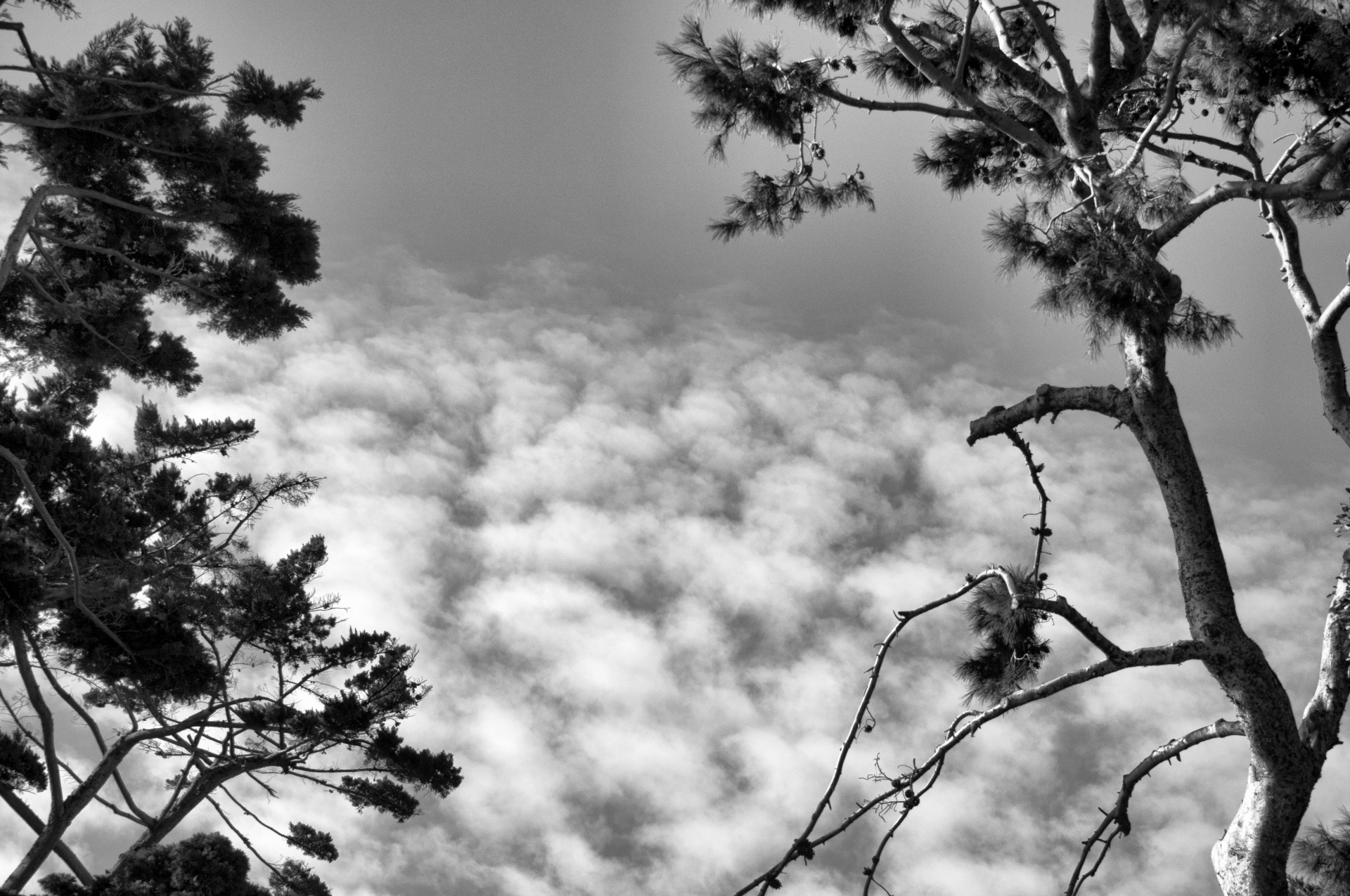 Tree Tops And Clouds Free Stock Photo - Public Domain Pictures