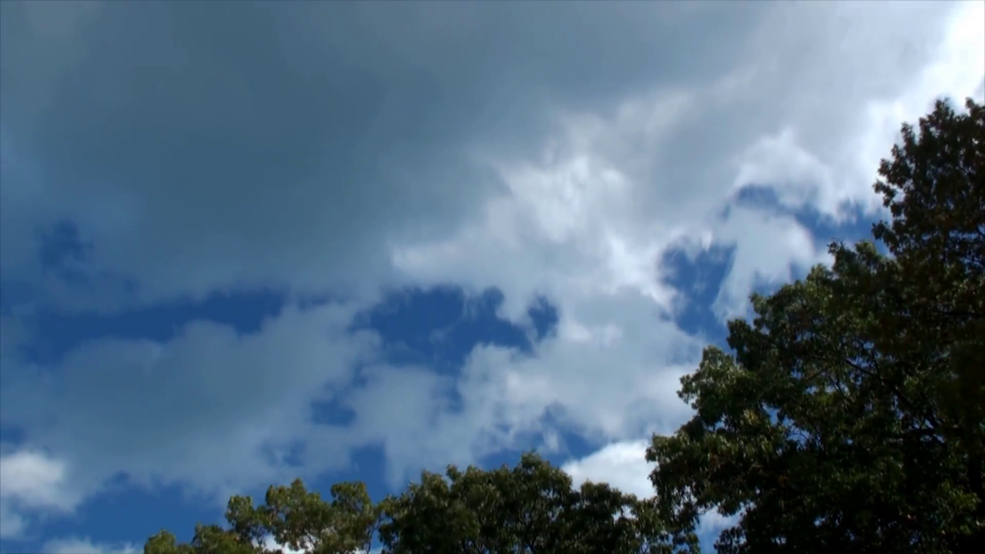Tree tops and clouds in time lapse 3 Stock Video Footage - VideoBlocks