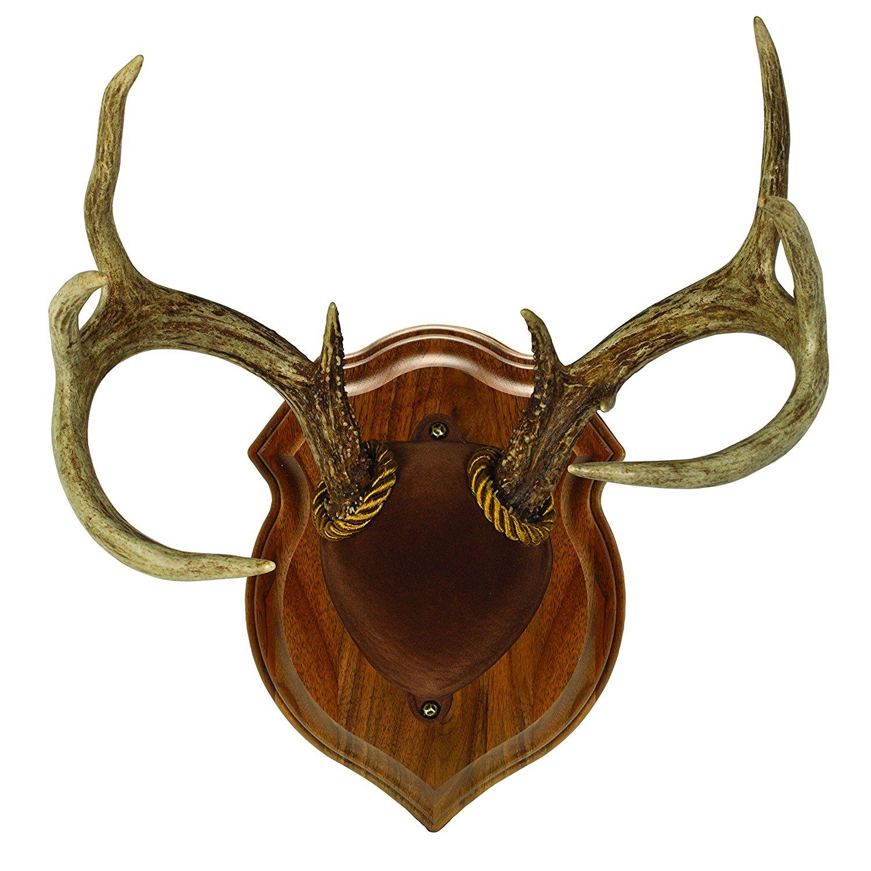 Amazon.com: Walnut Hollow Country Deluxe Antler Mount & Display Kit ...