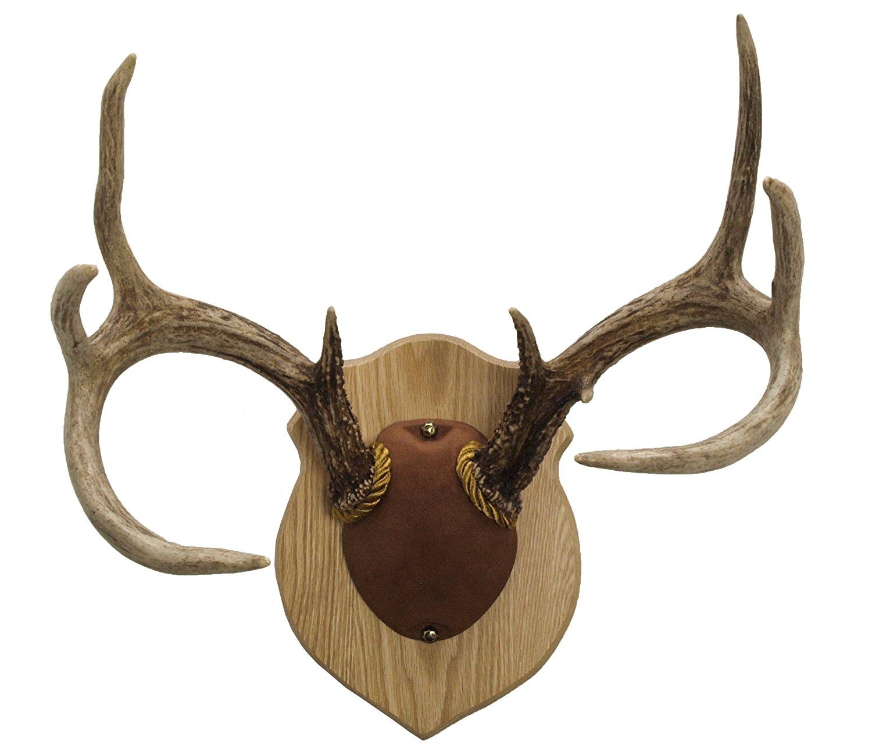 Amazon.com: Walnut Hollow Country Antler Mount & Display Kit, Oak ...