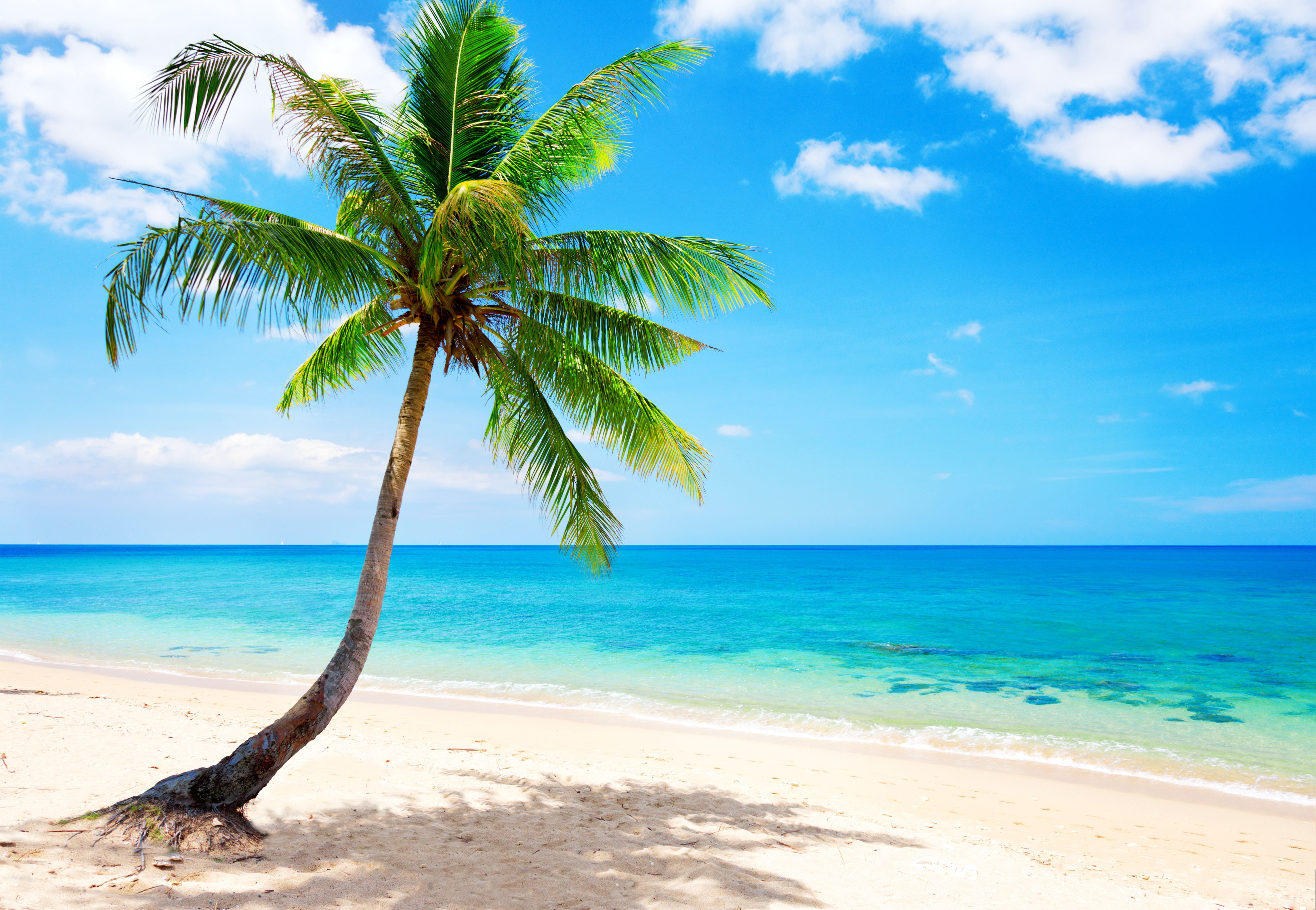 Tropical Beach Desktop Background wallpaper | On the Beach & By the ...