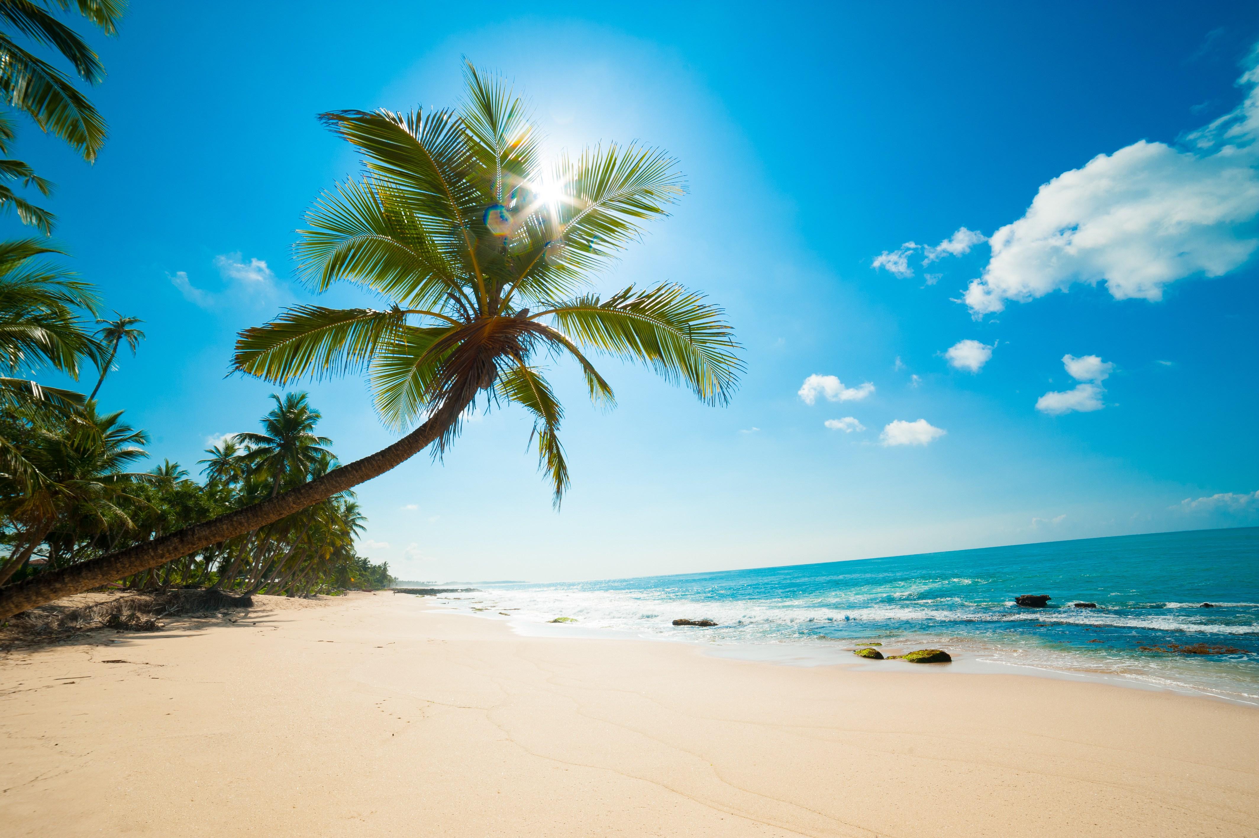 Tropical Beach - Sentient Life