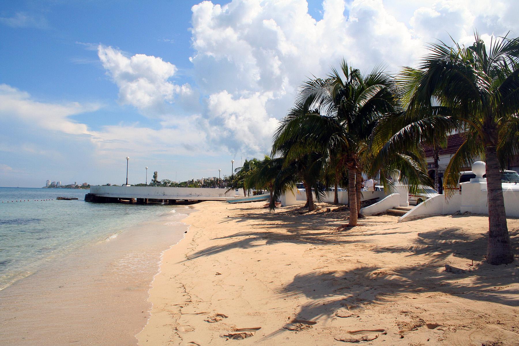 Tropical beach with palm trees, Beach, Harbor, Palm, Trees, HQ Photo