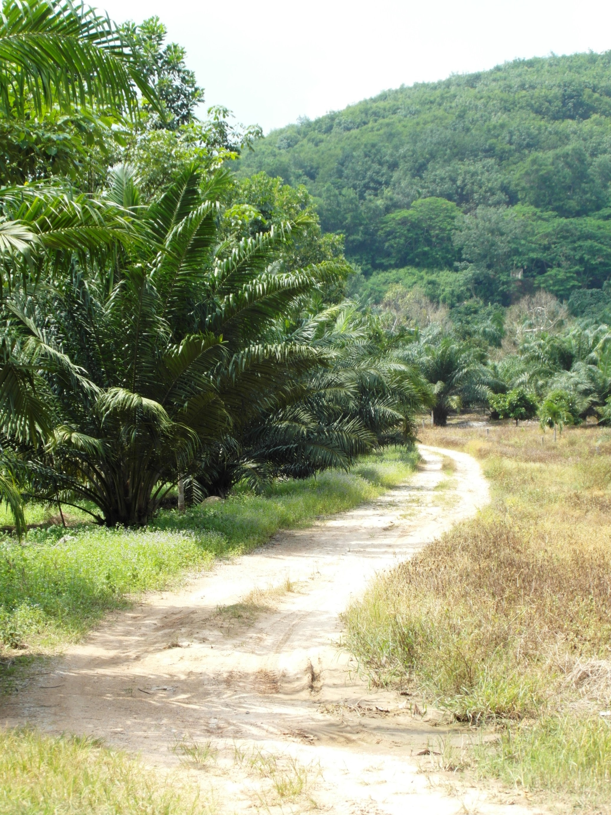 Tropical dirt road photo