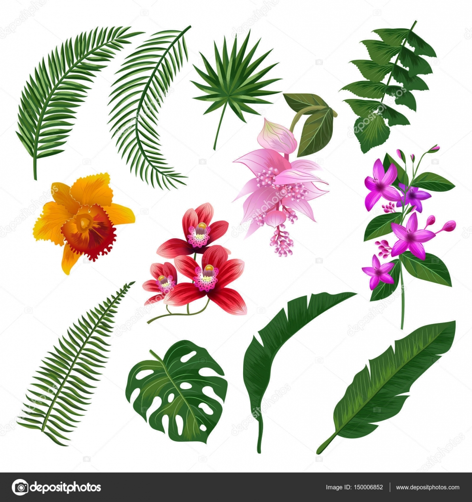 Set of Tropical flowers bouquet. Vector illustration of leaves and ...