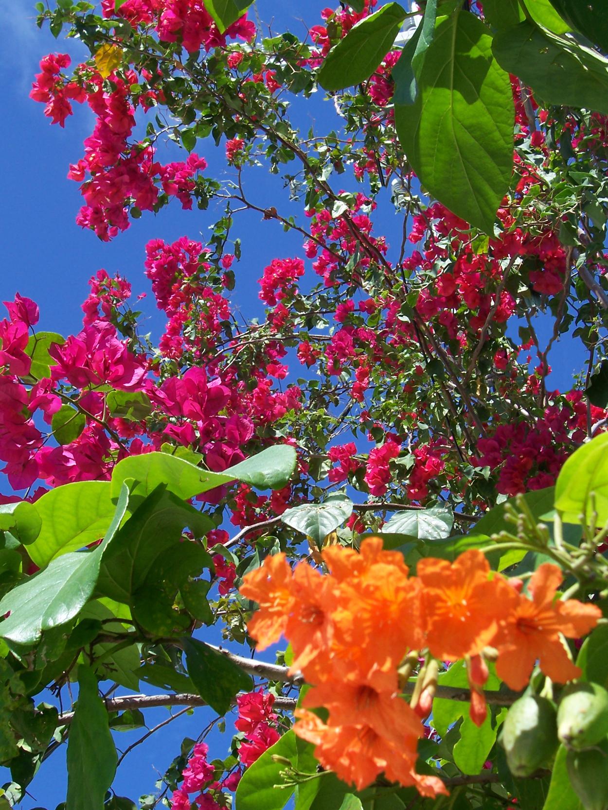 Tropical flowers, Beautiful, Blue, Bspo07, Closeup, HQ Photo