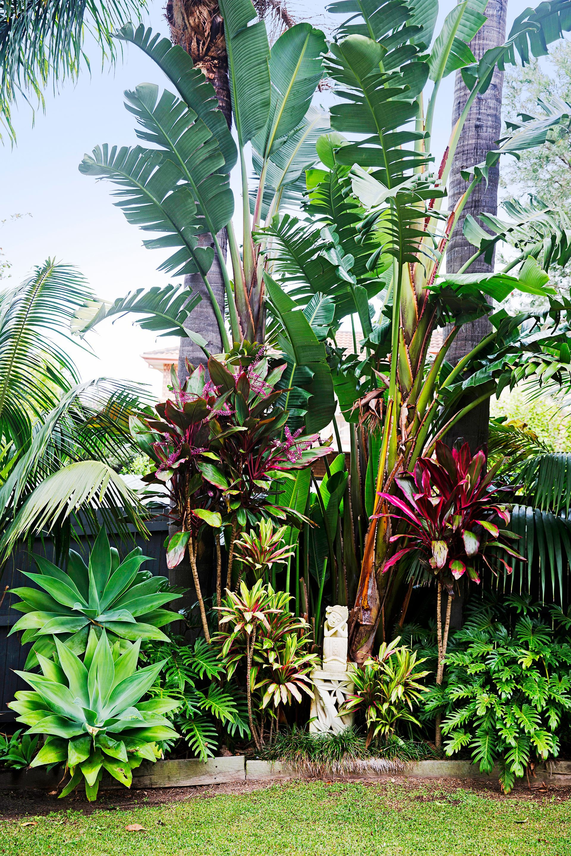 Tropical garden photo