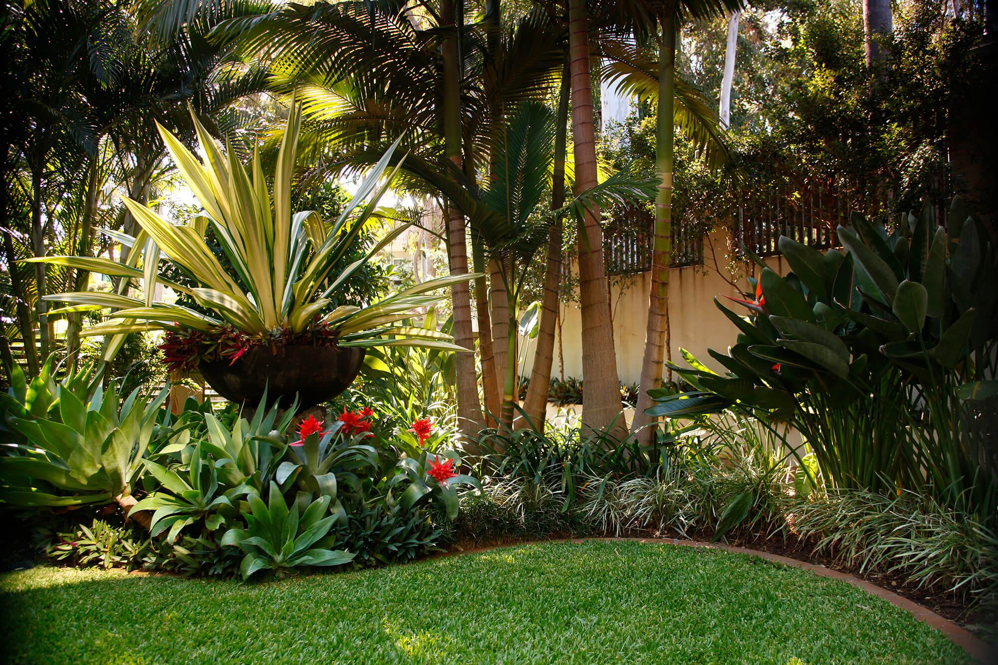 Free photo: Tropical Garden - row, shade, shrubs - Non-Commercial ...