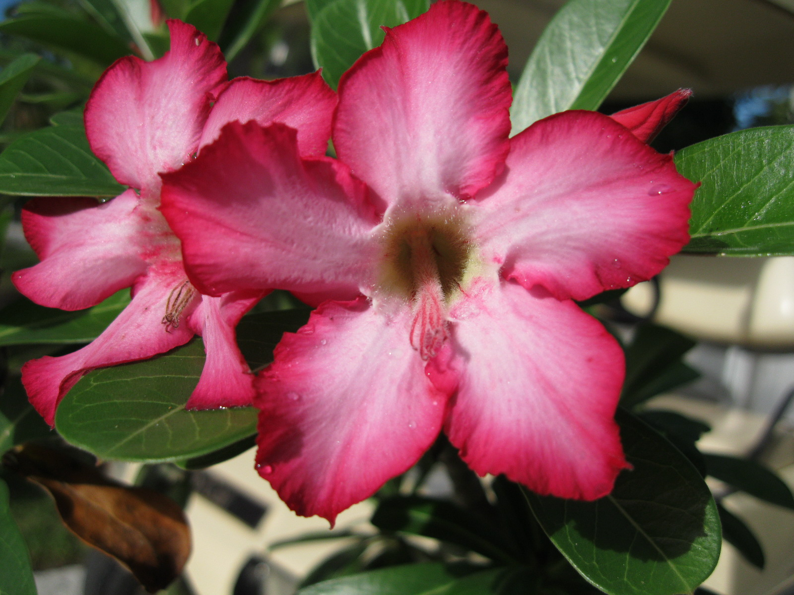 pink flower   Tropical Florida Gardens
