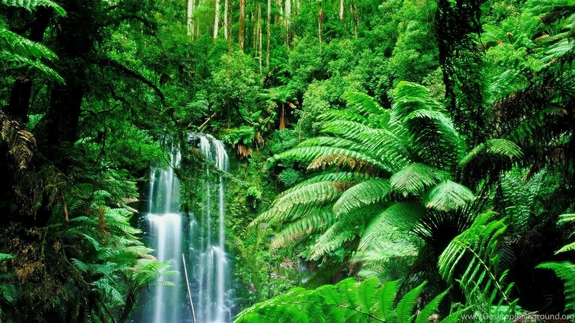 Rainforest Scene Of Forest With Lot Of Greenary HD Desktop Wallpaper ...