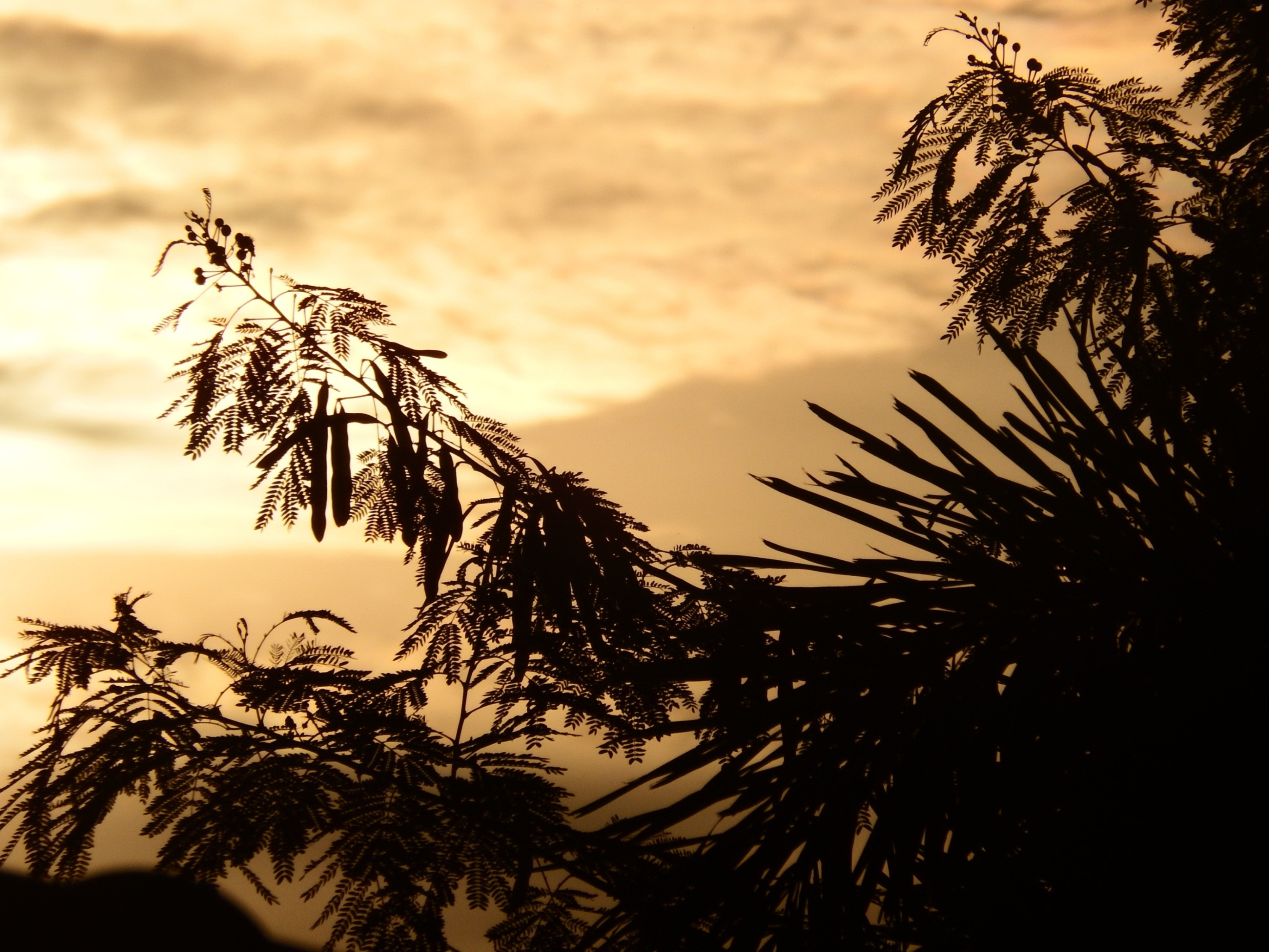 Tropical trees silhouette at sunset photo
