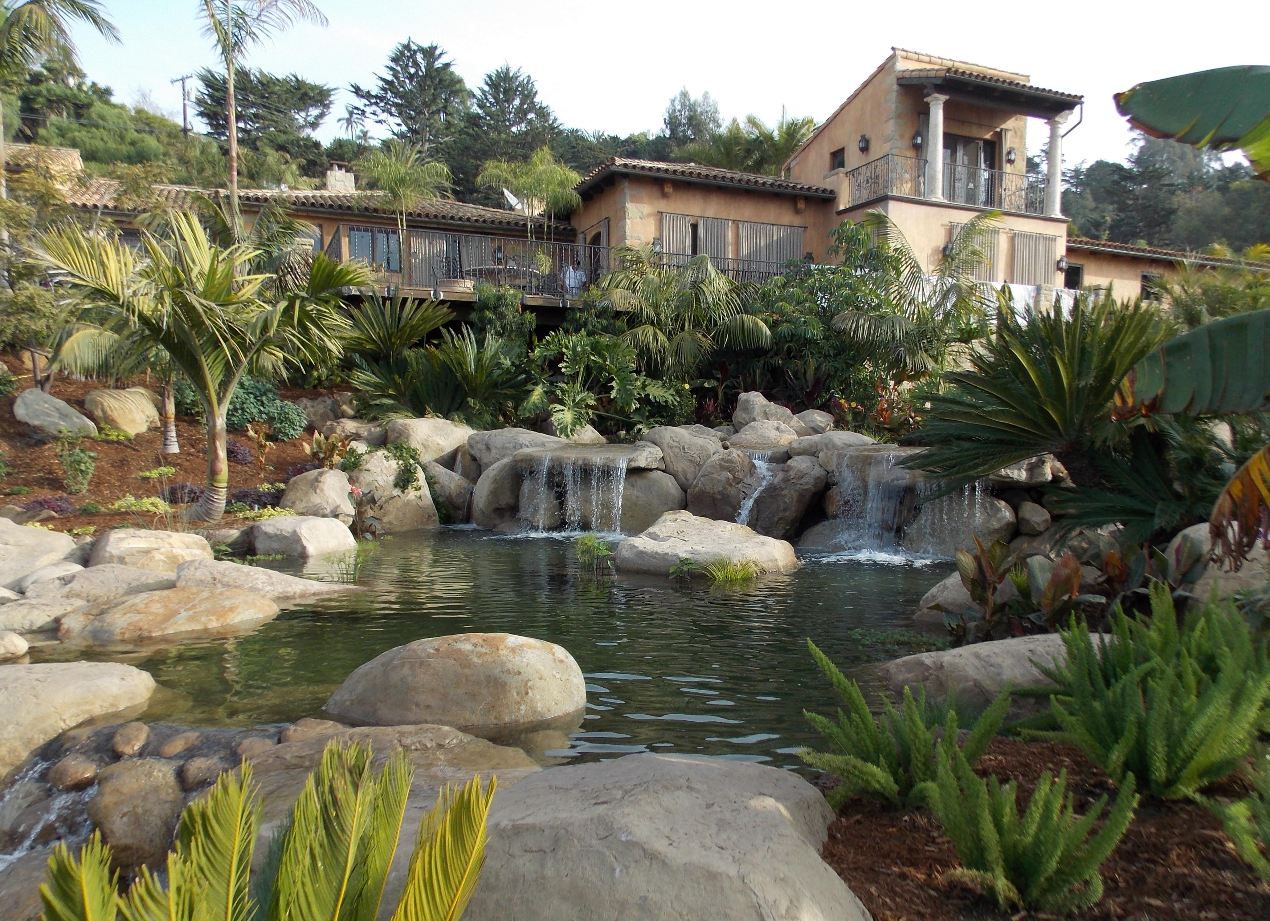 Tropical water garden photo