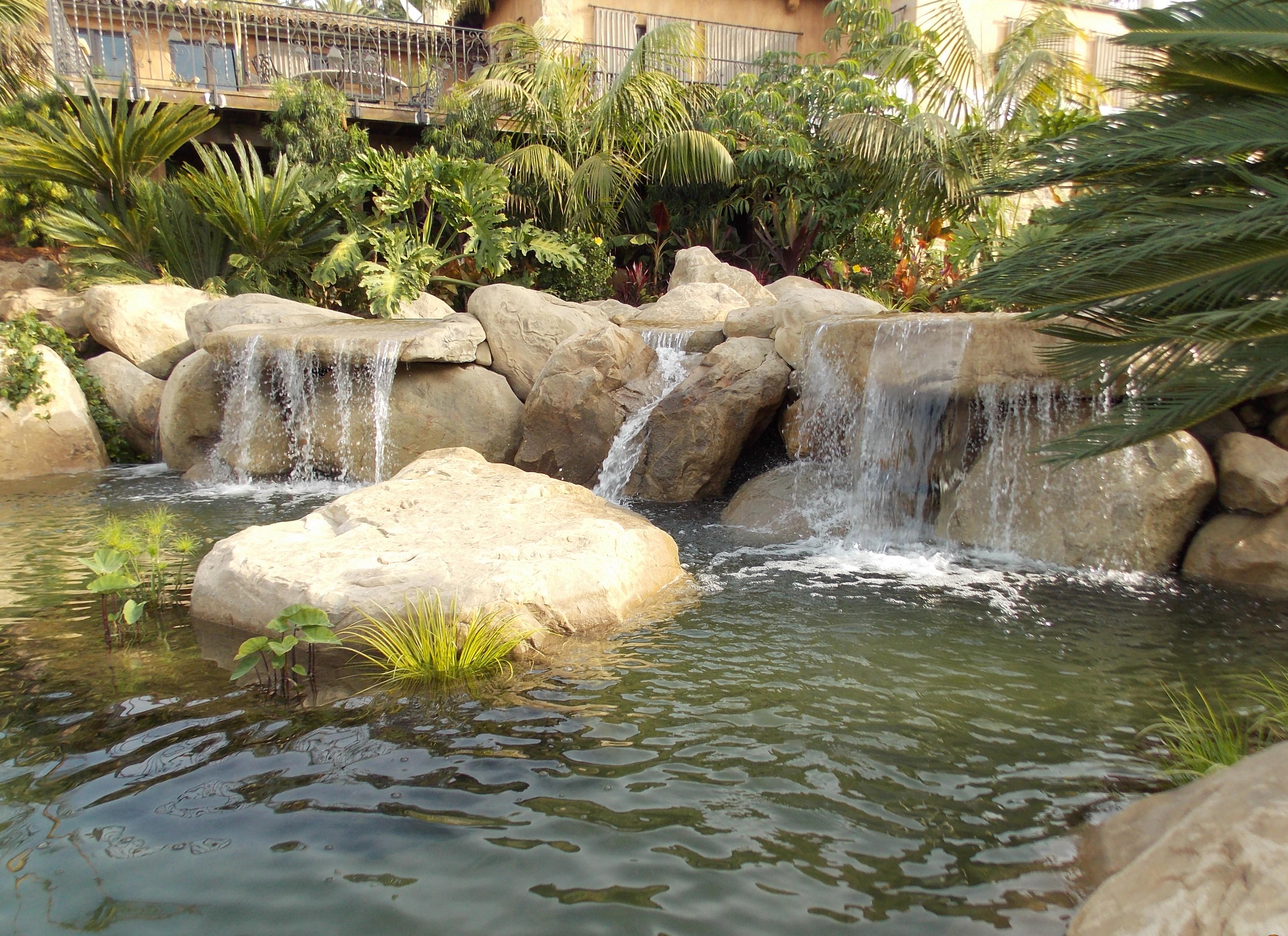 Tropical Water Garden | Garcia Rock And Water Design Blog