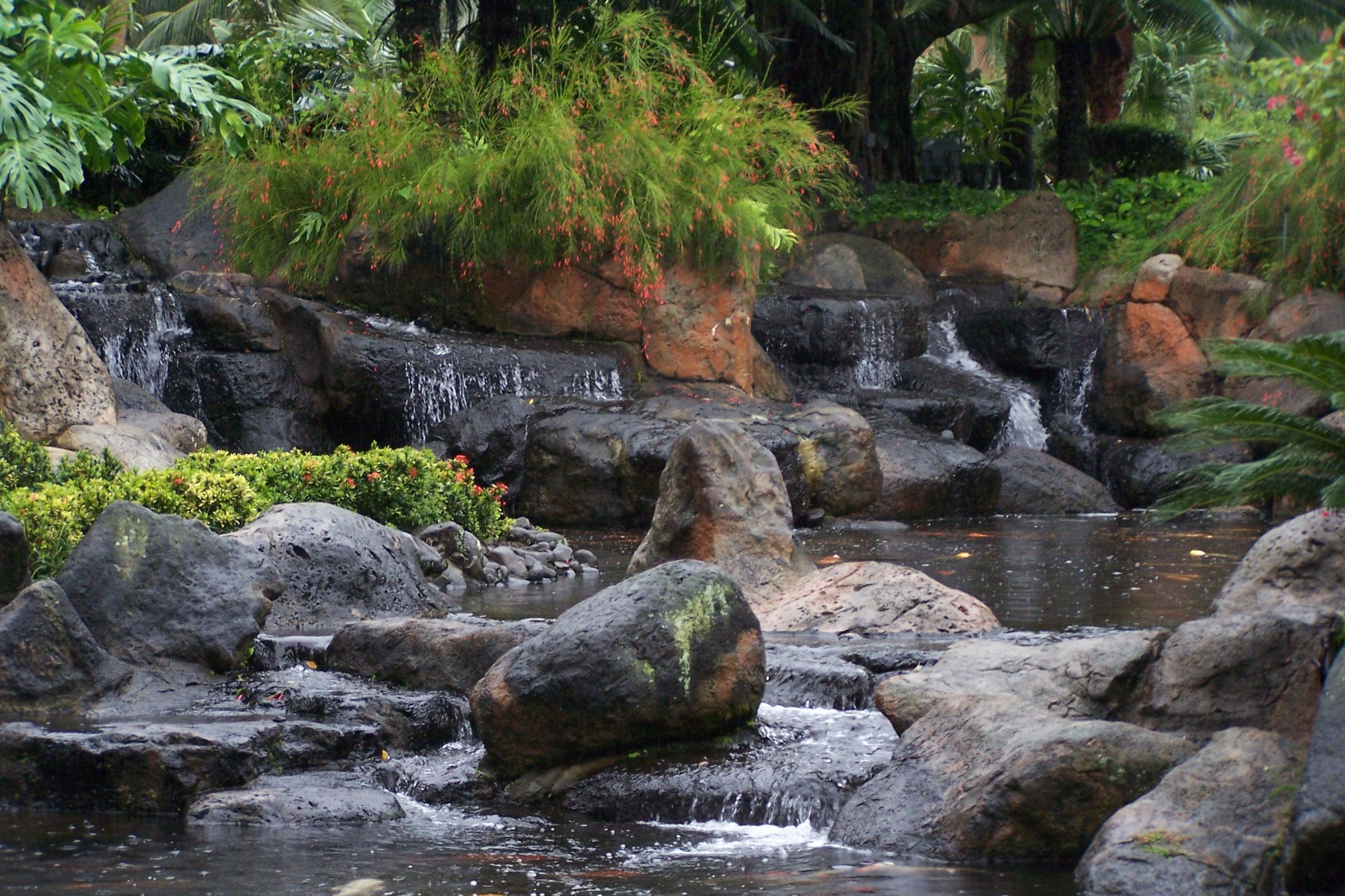Tropical Water Garden, Flowers, Garden, Plants, Rock, HQ Photo