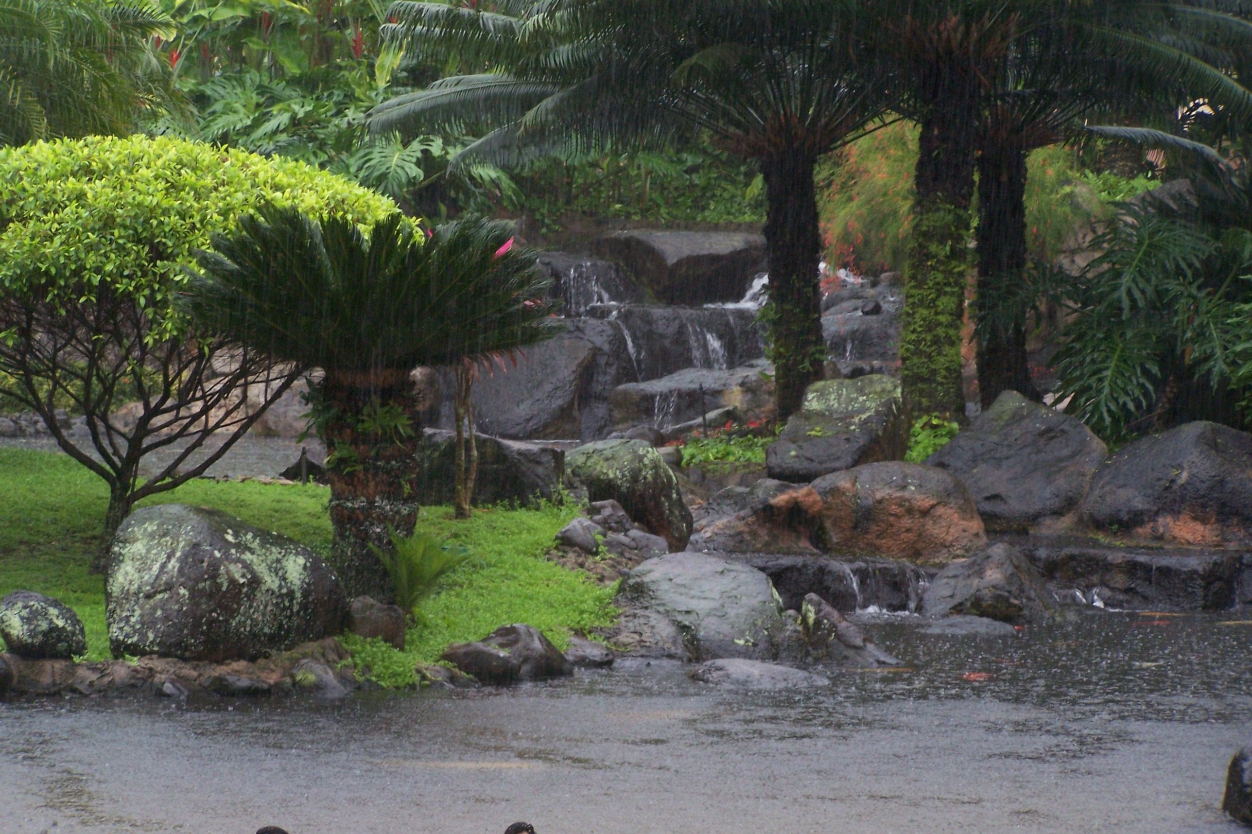 Tropical Water Garden, Tranquil, Tropical, Rock, Water, HQ Photo