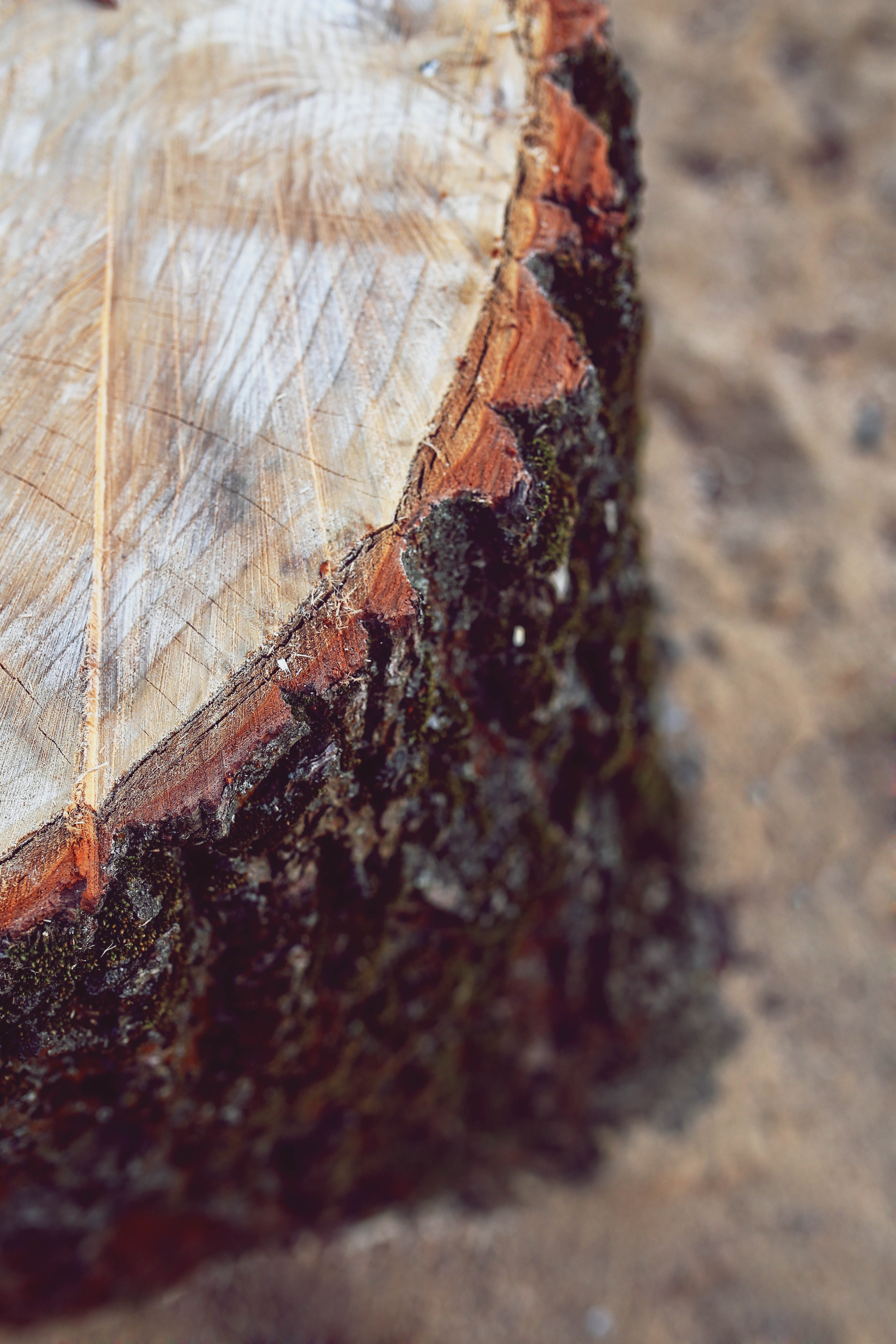 Trunk / bole, Abstract, Rock, Wood, Trunk, HQ Photo