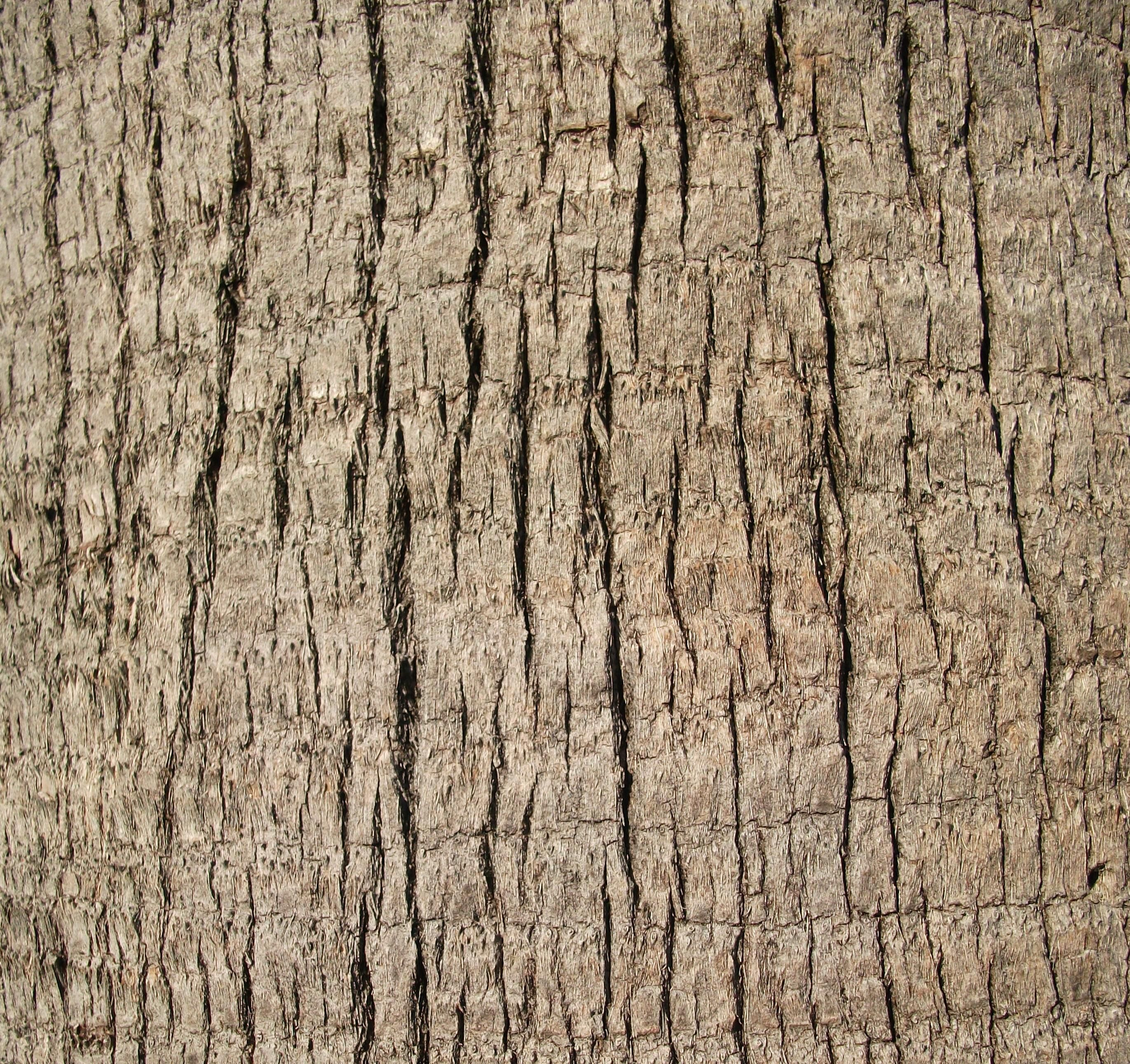 Free picture: up-close, palm tree, trunk, texture