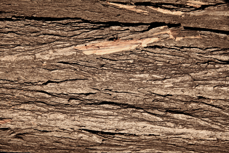 17 Tree trunk textures | Texture Fabrik
