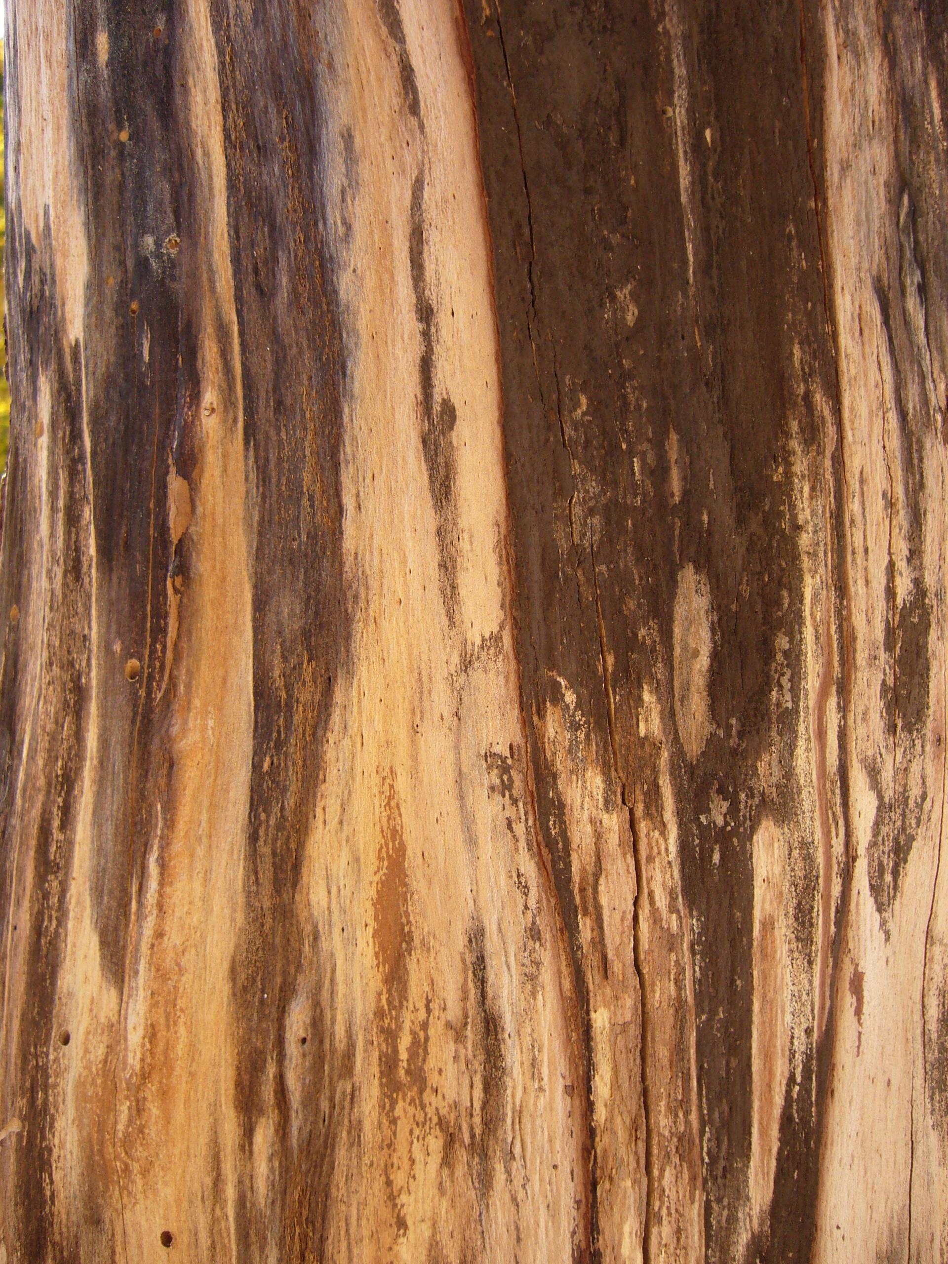 Free Wood texture (grain, pattern, trunk)