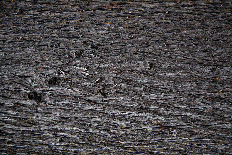 20 Tree trunk textures vol.2 | Texture Fabrik